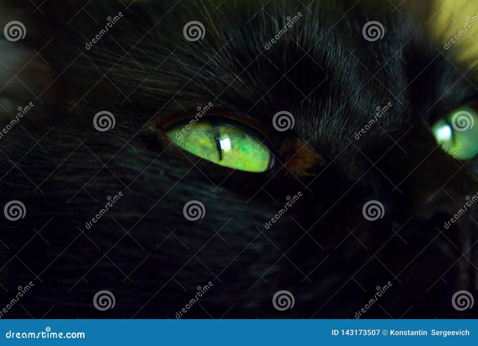 Ciérrese para arriba de gato del ojo