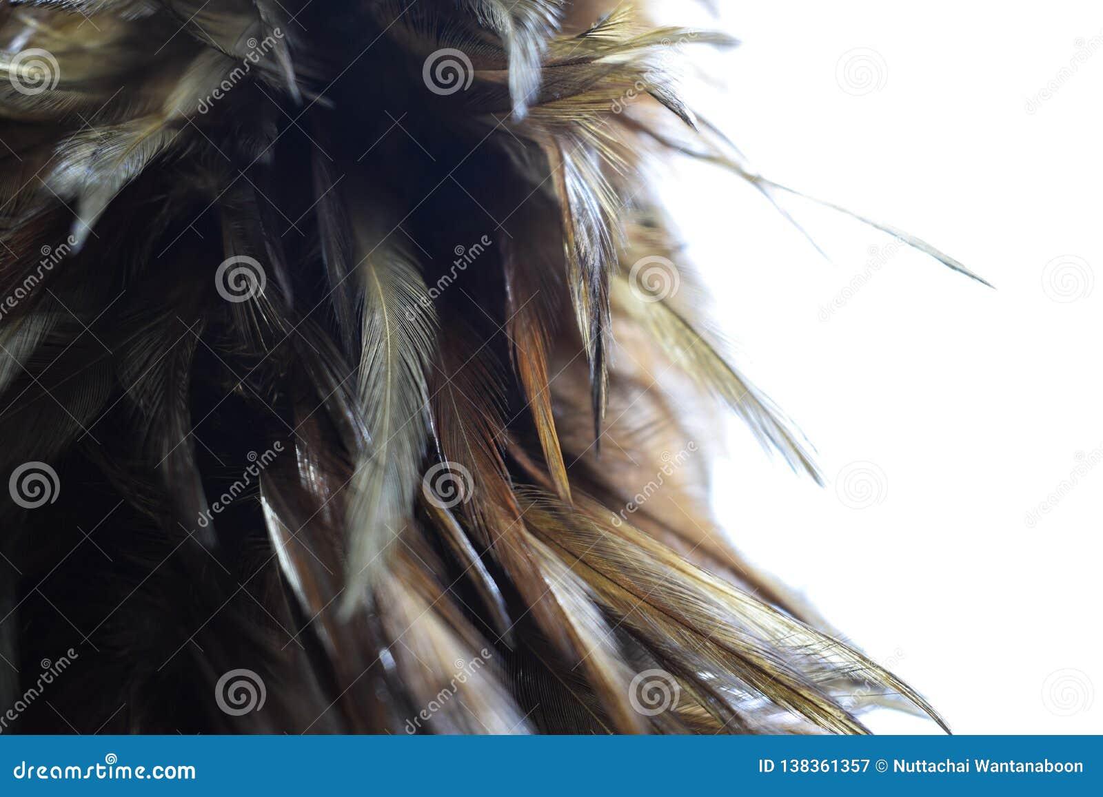 Ciérrese para arriba de la escoba de la pluma en el fondo blanco