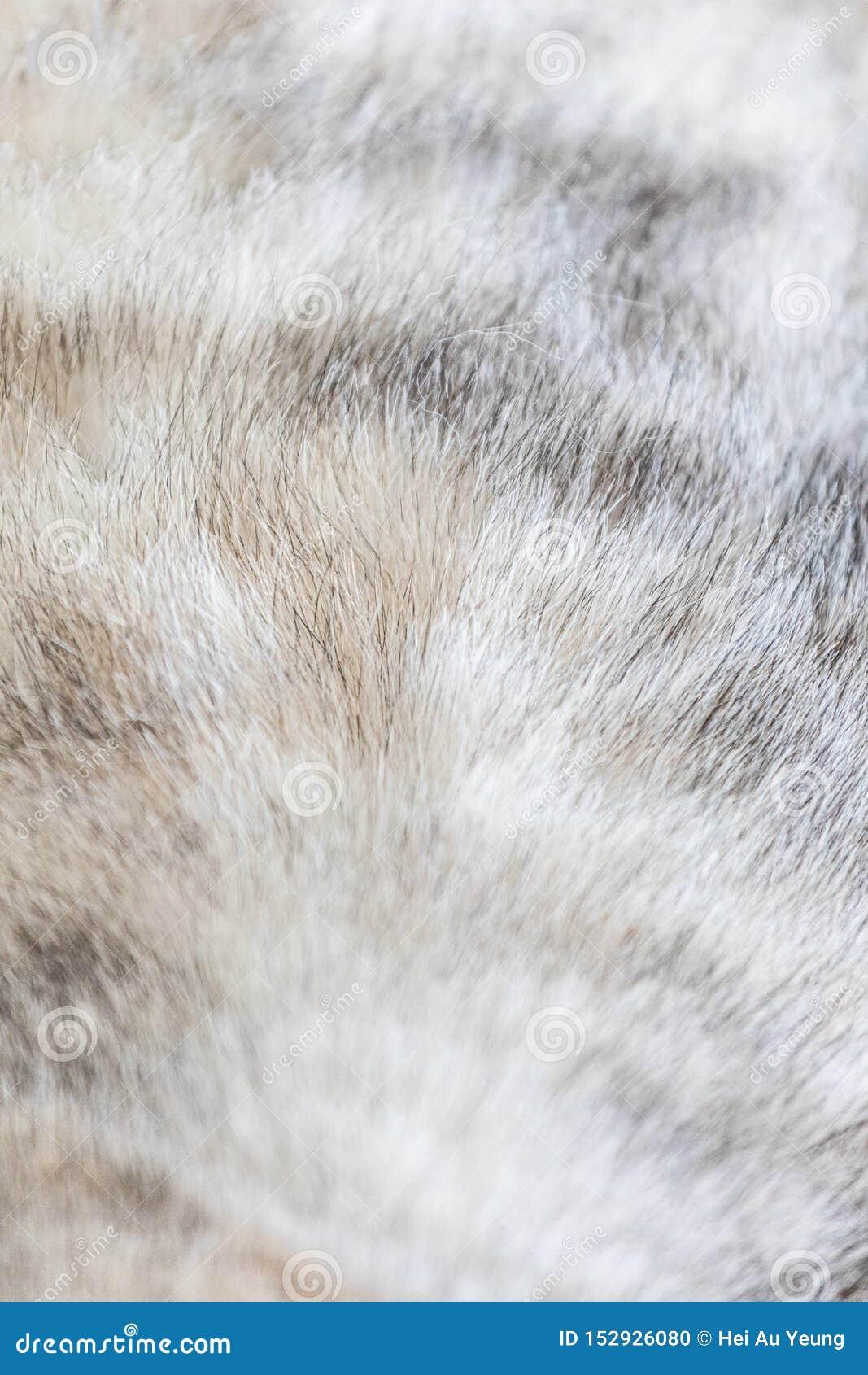 Ciérrese para arriba de la piel de un gato