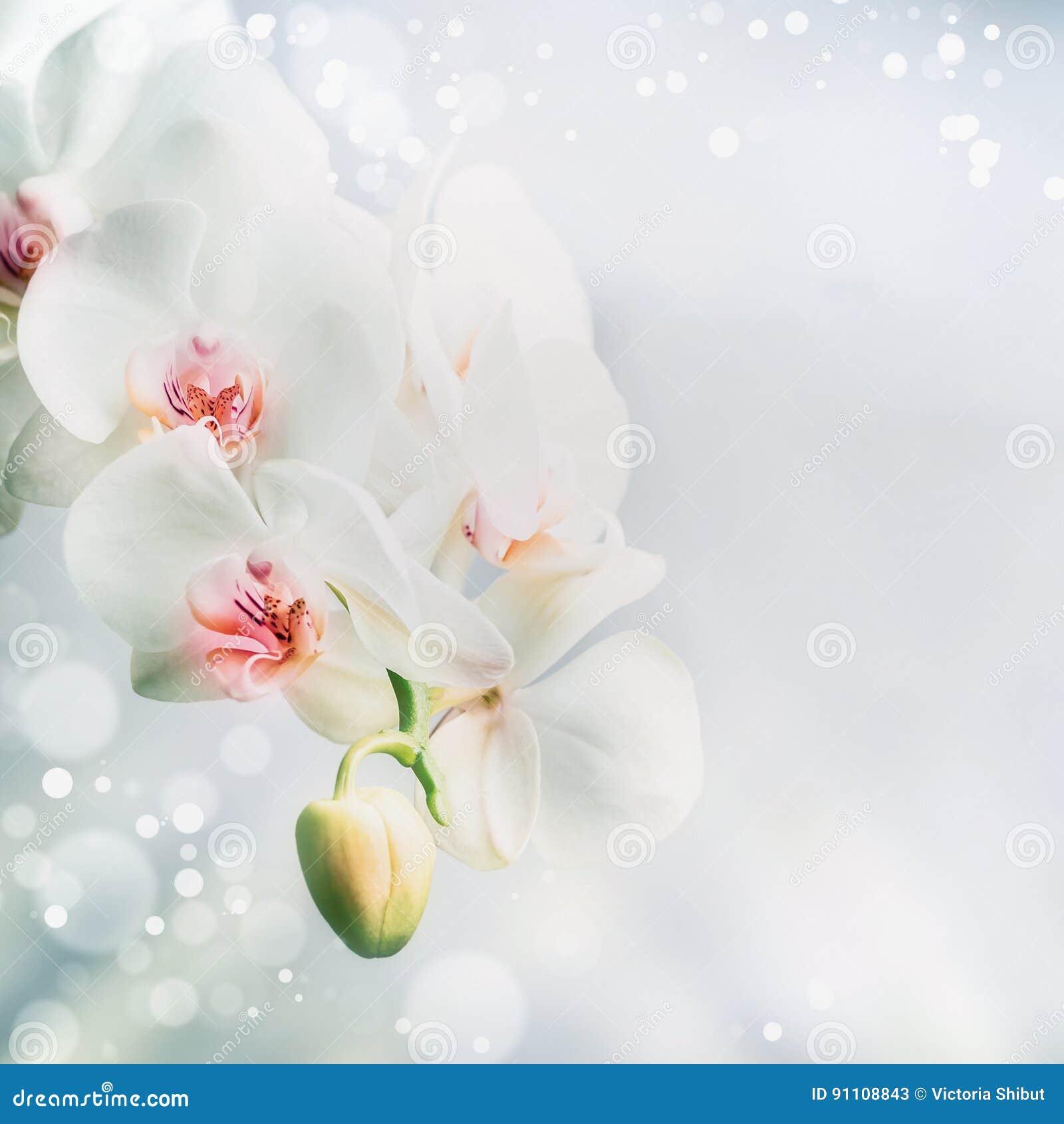 Cierrese Para Arriba De Las Flores Blancas Hermosas De La Orquidea