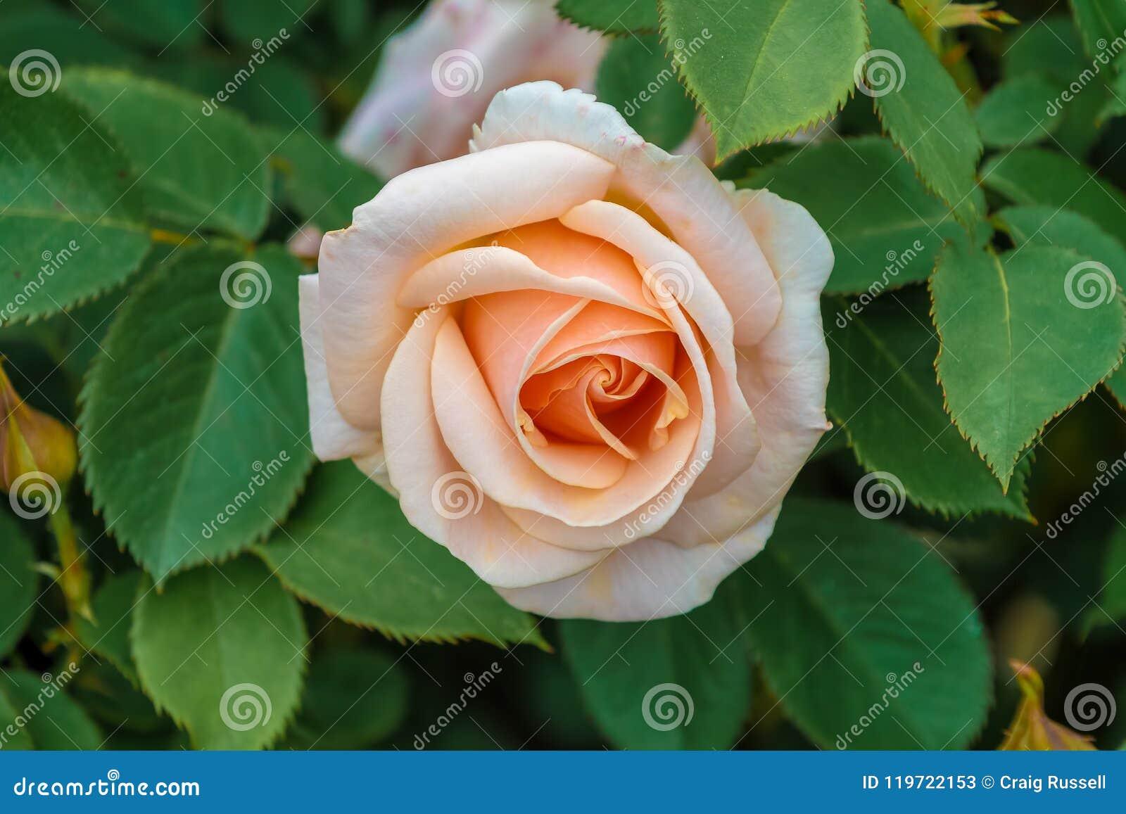 Encantador Uñas De Color Rosa Naranja Adorno - Ideas Para Esmaltes ...