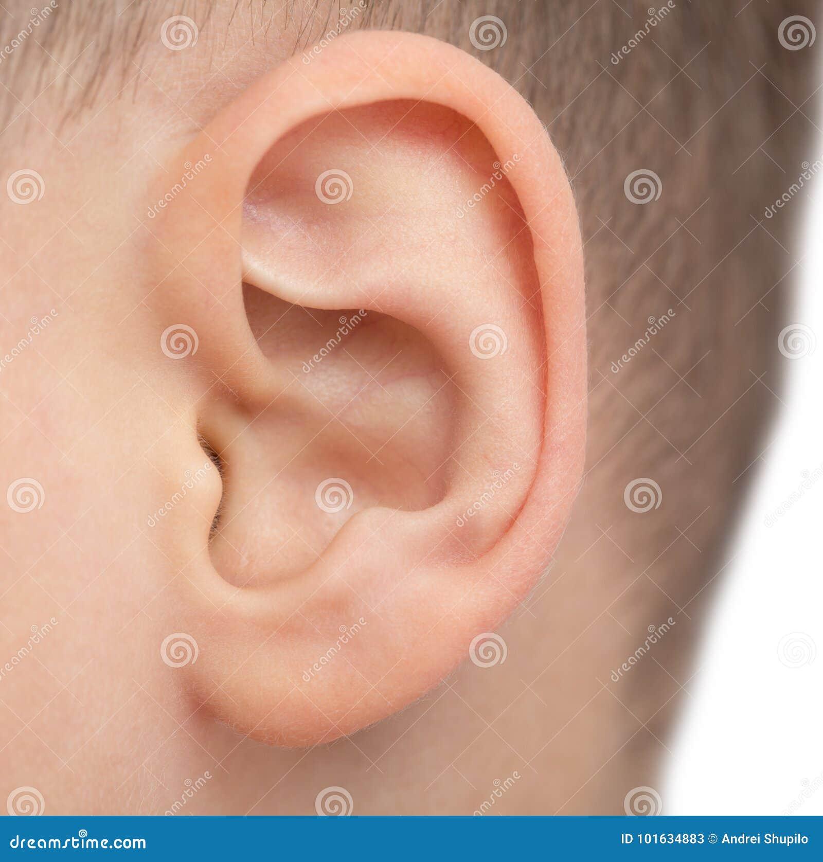 Ciérrese para arriba del oído masculino