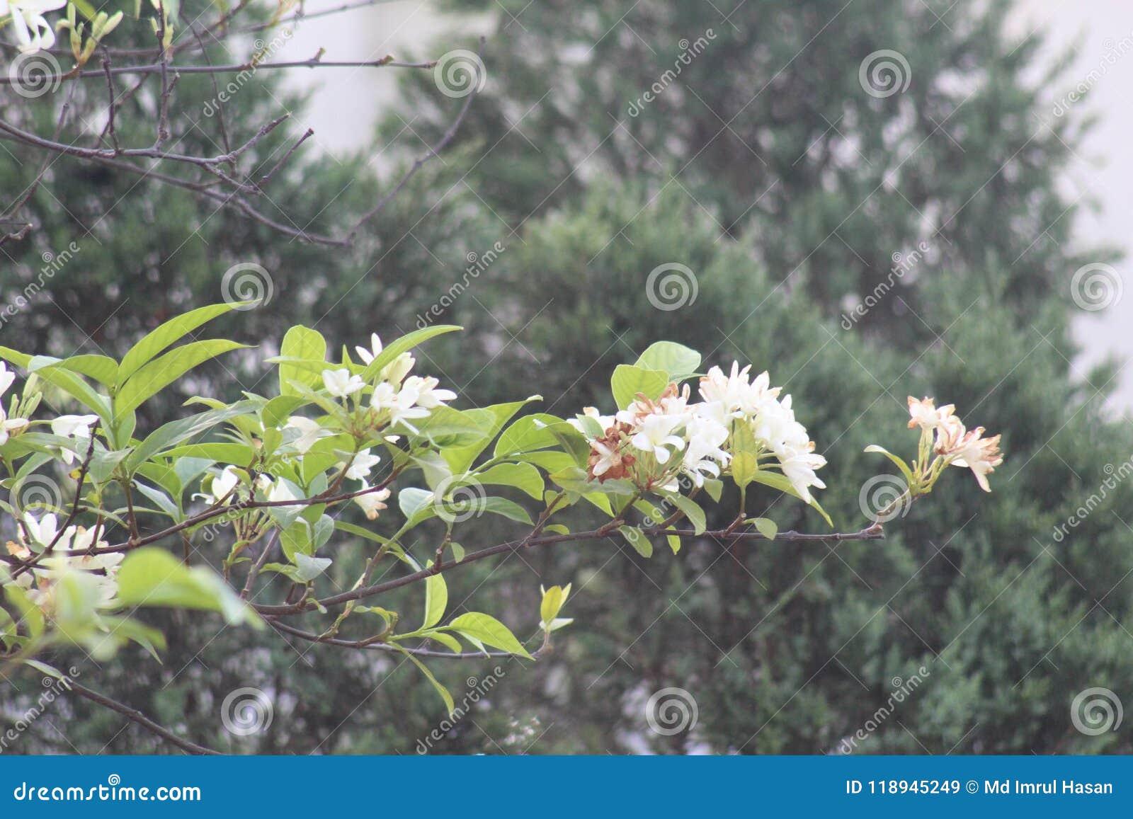 Ciò è fiore bianco ciò è fiore stupefacente