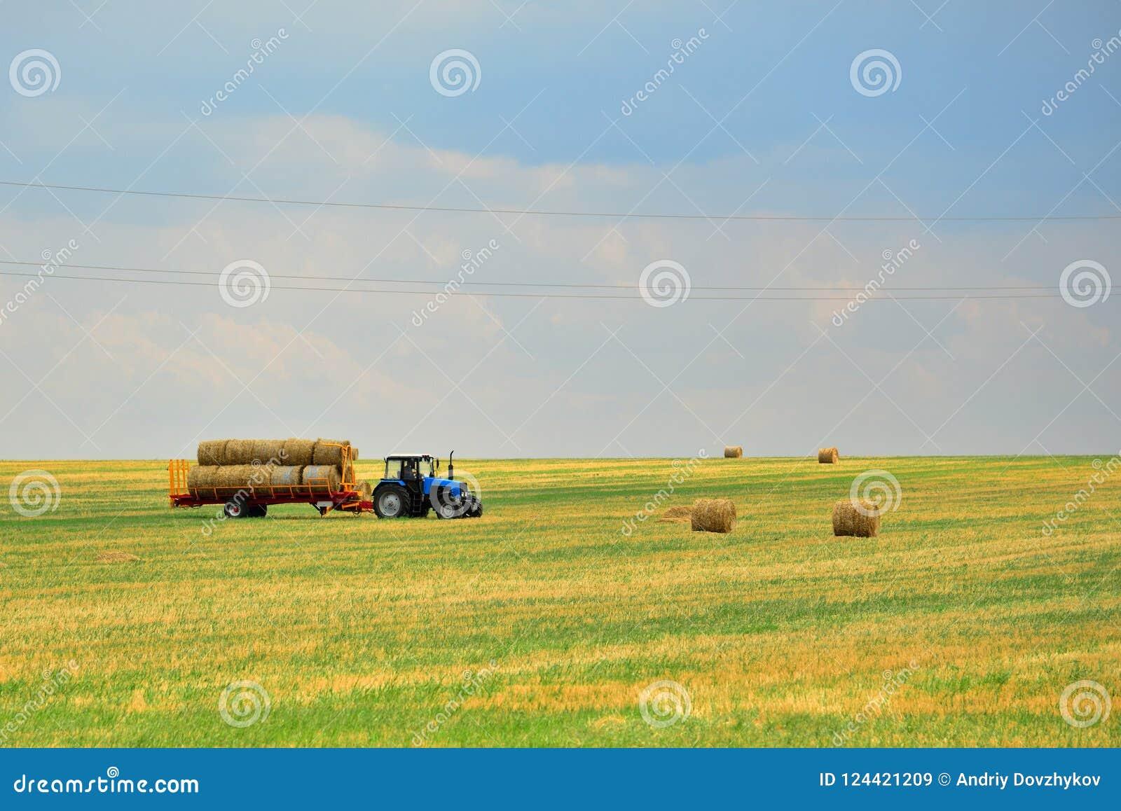 Ciągnik zbiera siano w snopach i bierze je z pola po kośby adra Agroindustrial przemysł