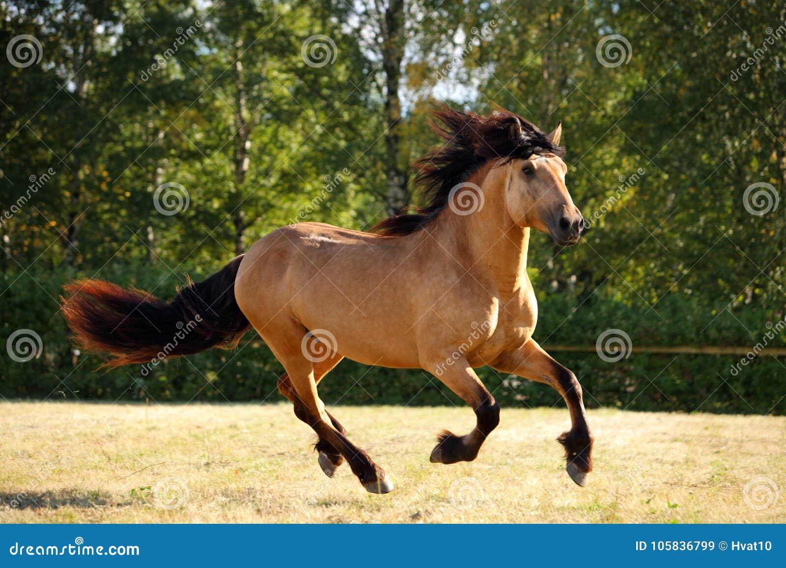 Ciężki szkicu konia bieg cwał w polu