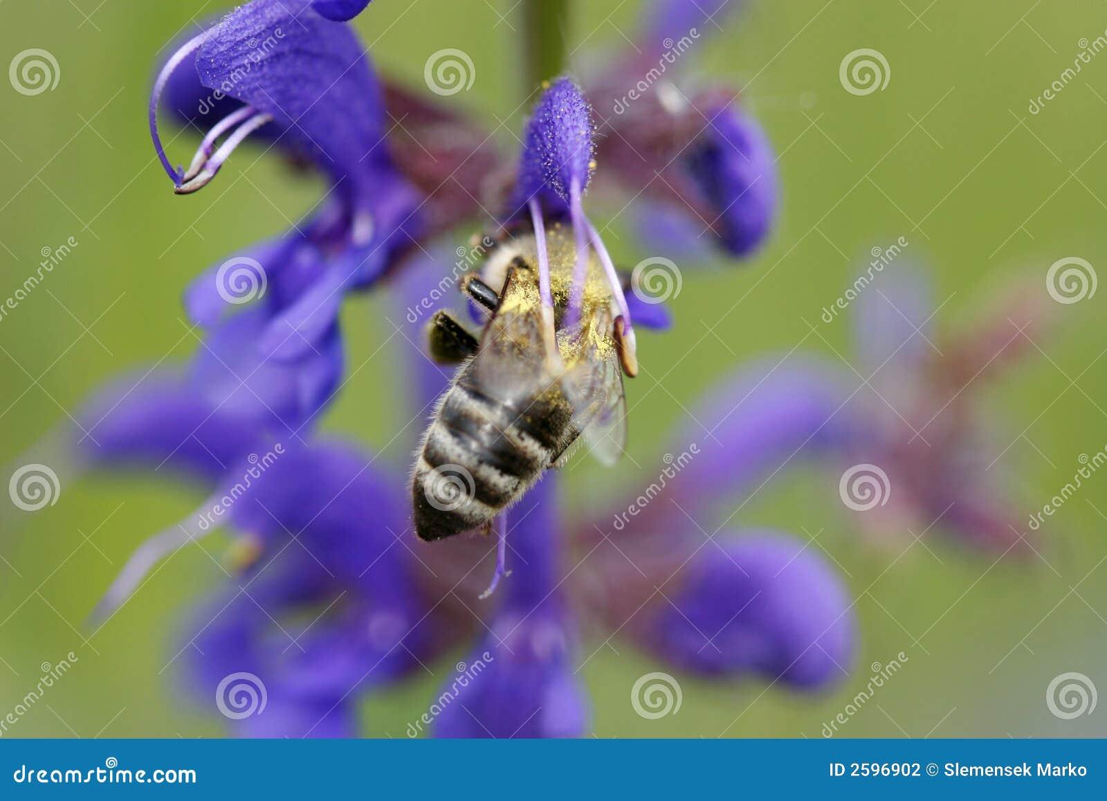 Ciężko pracującym pszczół