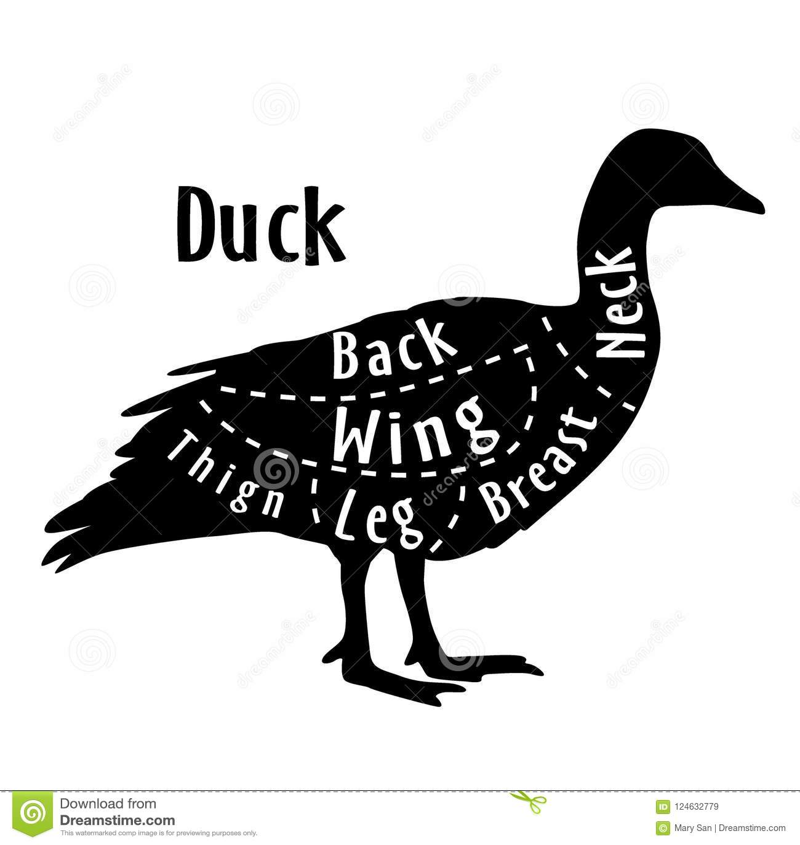 Cięcie kaczka, diagram dla masarki Plakat dla masarka sklepu Przewdonik dla ciąć również zwrócić corel ilustracji wektora