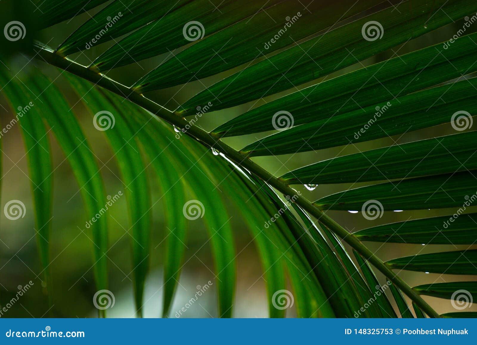 Ci?rrese encima de las hojas de palmeras