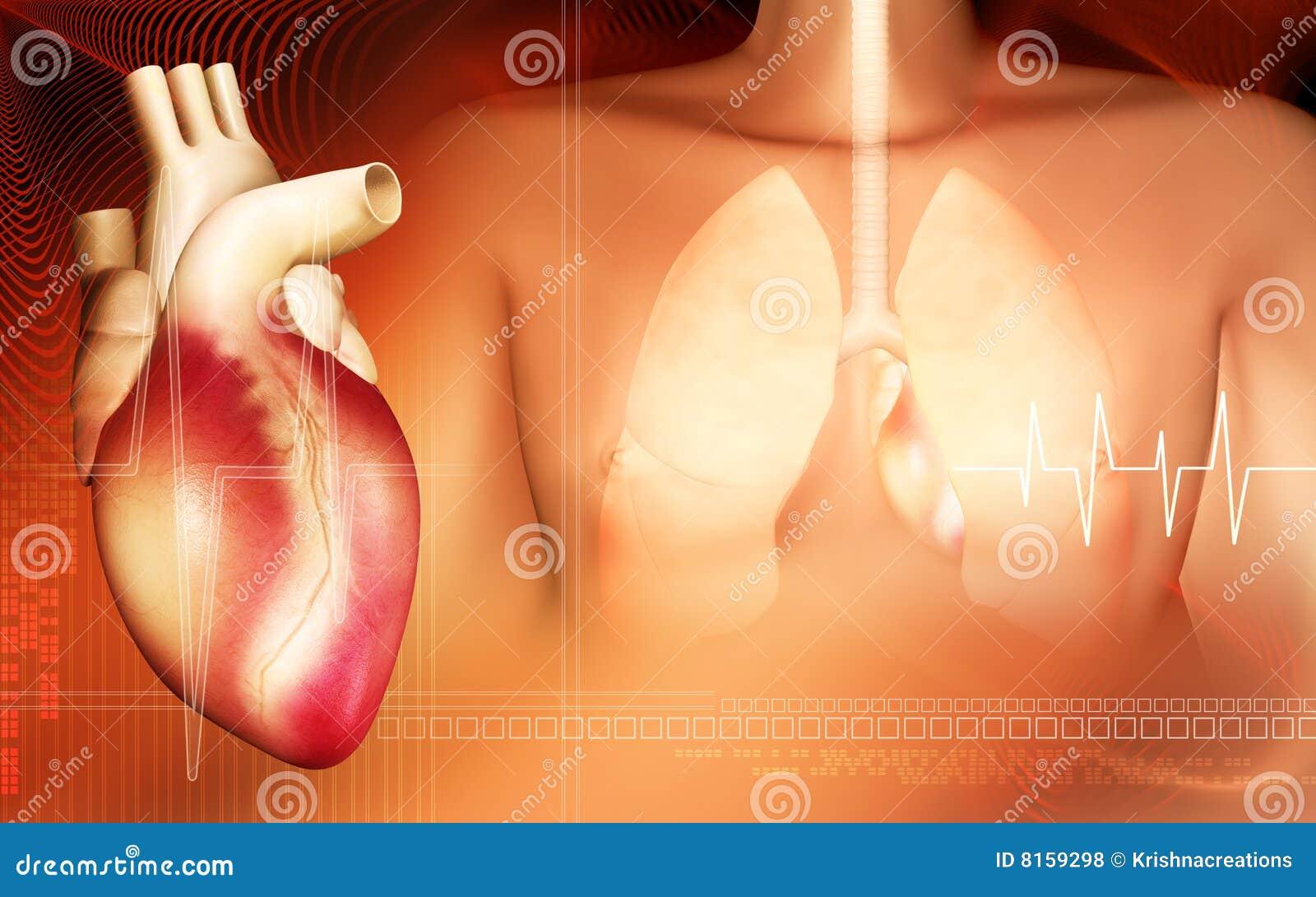 Ciał płuca kierowi ludzcy
