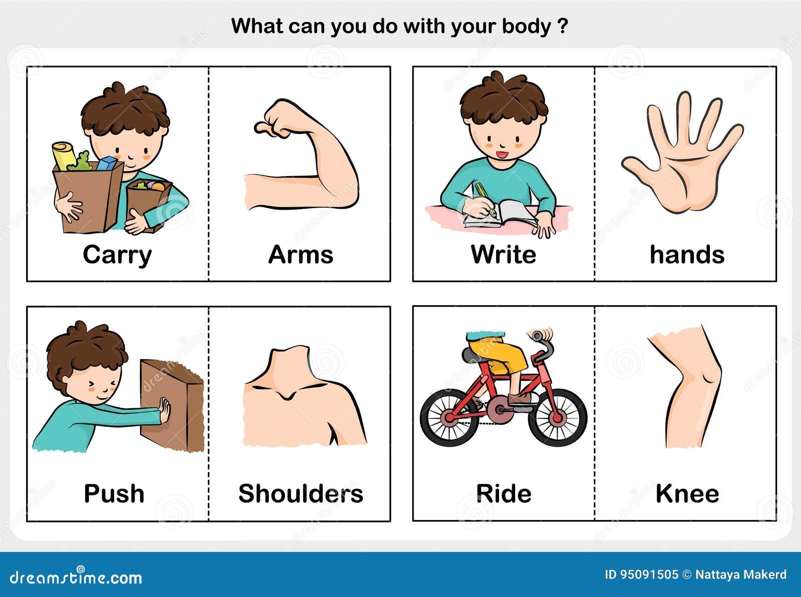 Ciało funkcja niesie, pisze, pcha, jedzie, - część ciała pojęcie