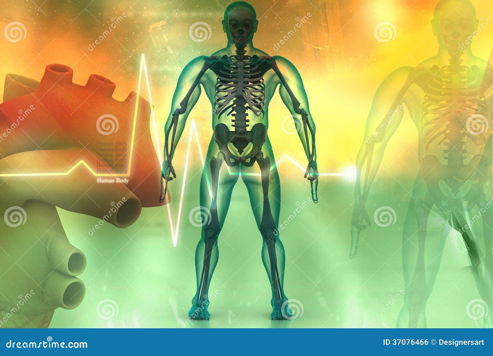 Download Ciało ludzkie ilustracji. Ilustracja złożonej z rodzaj - 37076466