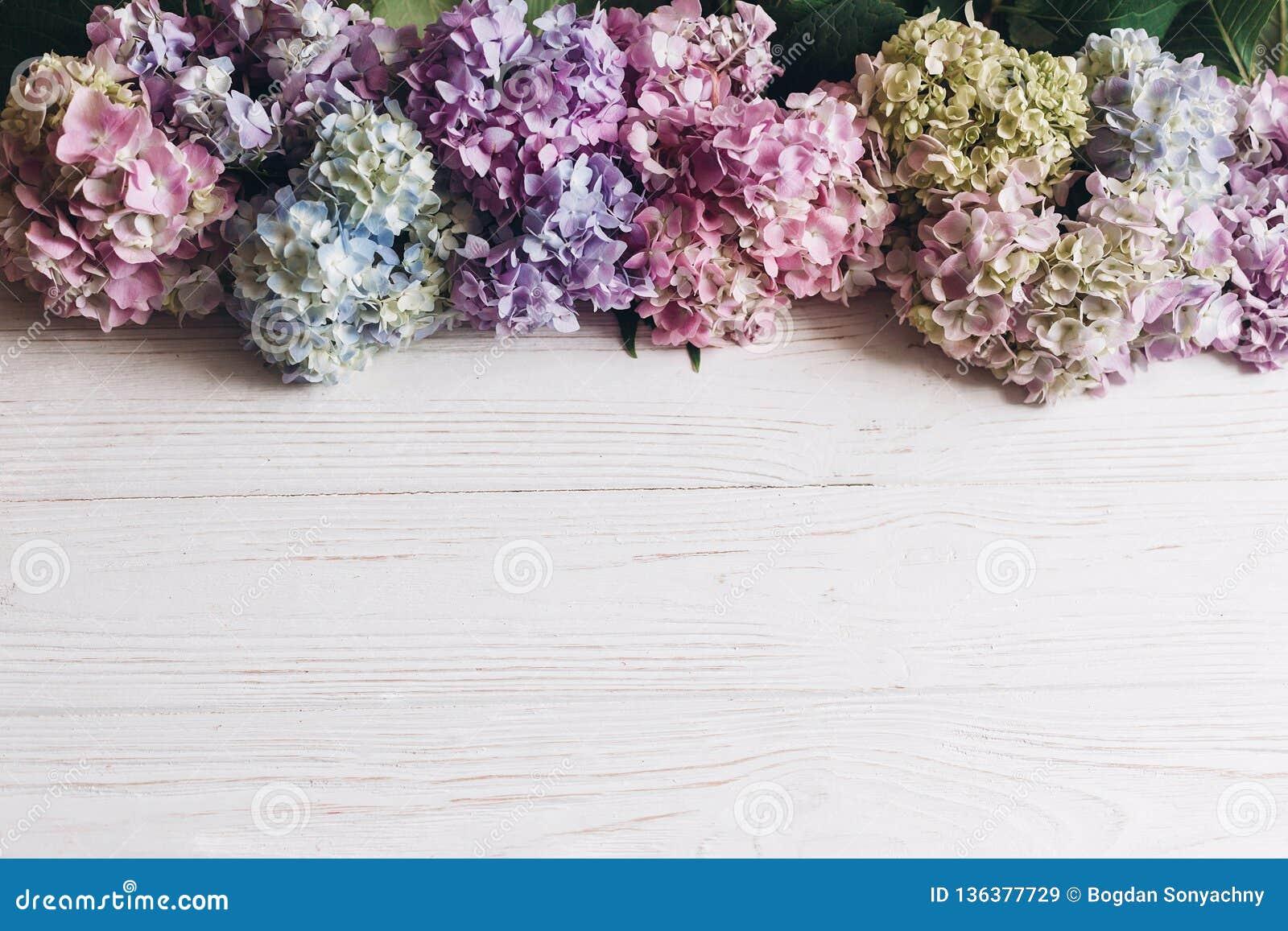 Ciao primavera Giorno di madri felice Giorno delle donne Bei fiori dell ortensia su legno bianco rustico, disposizione piana Rosa