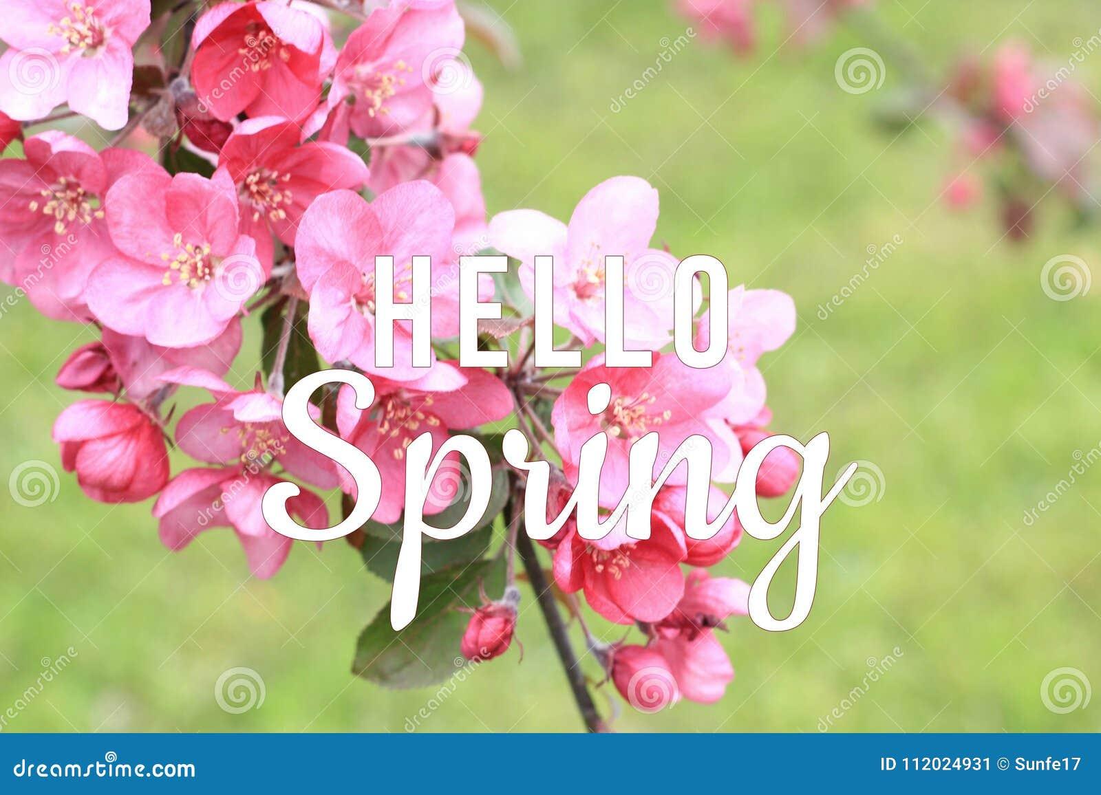 Ciao testo della primavera sul fondo di fioritura del ramo di albero