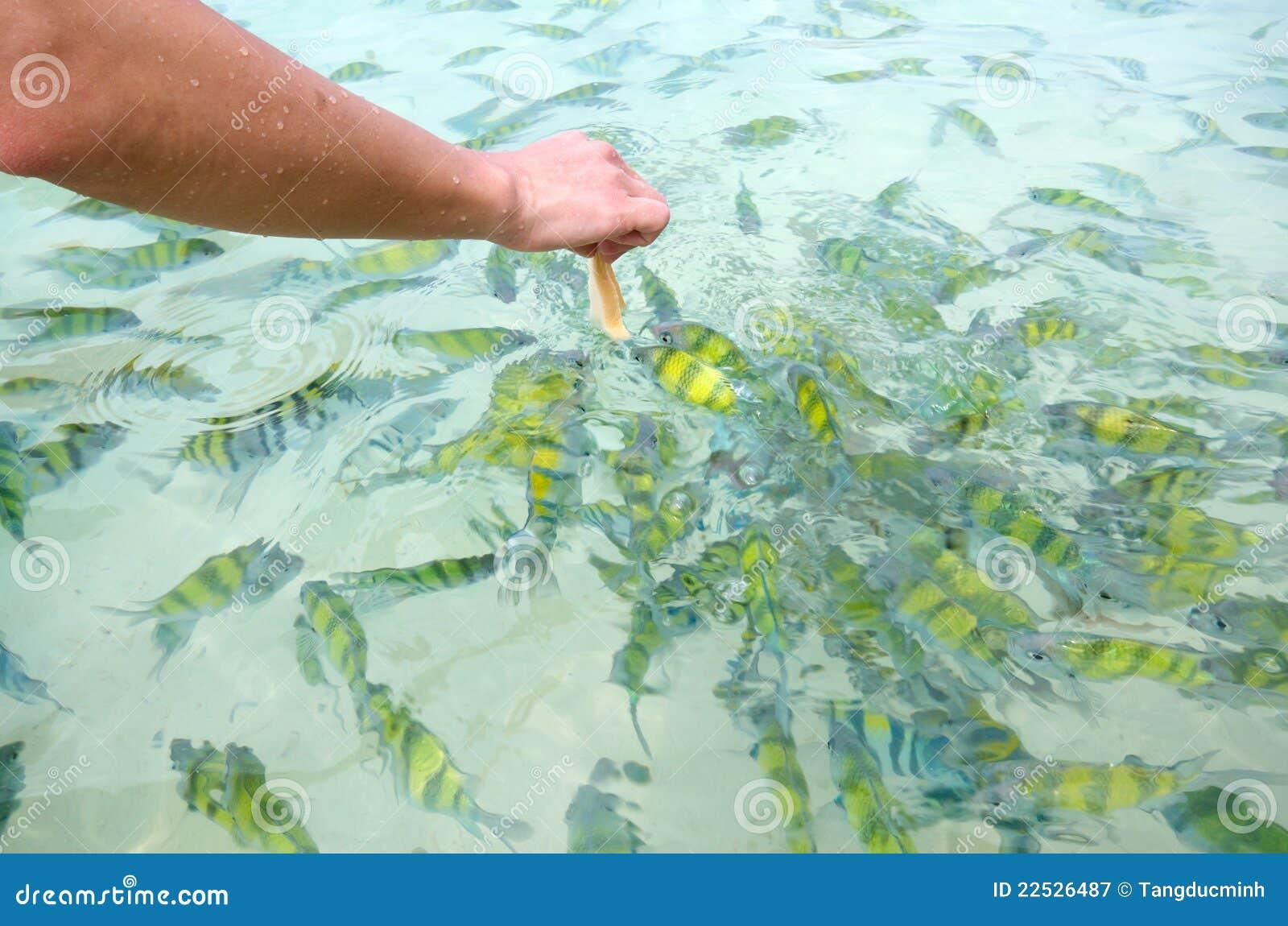 Cibo dei pesci immagine stock immagine di spiaggia pane for Cibo per pesci tropicali