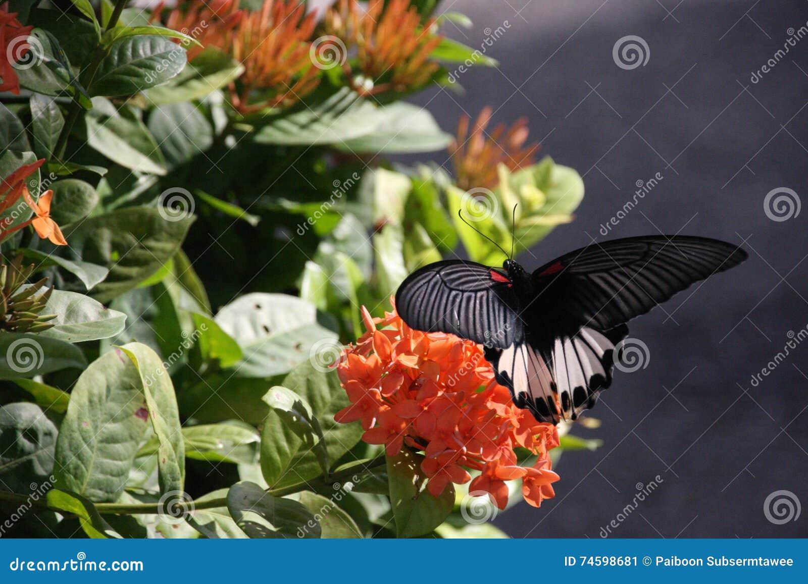Cibo della farfalla