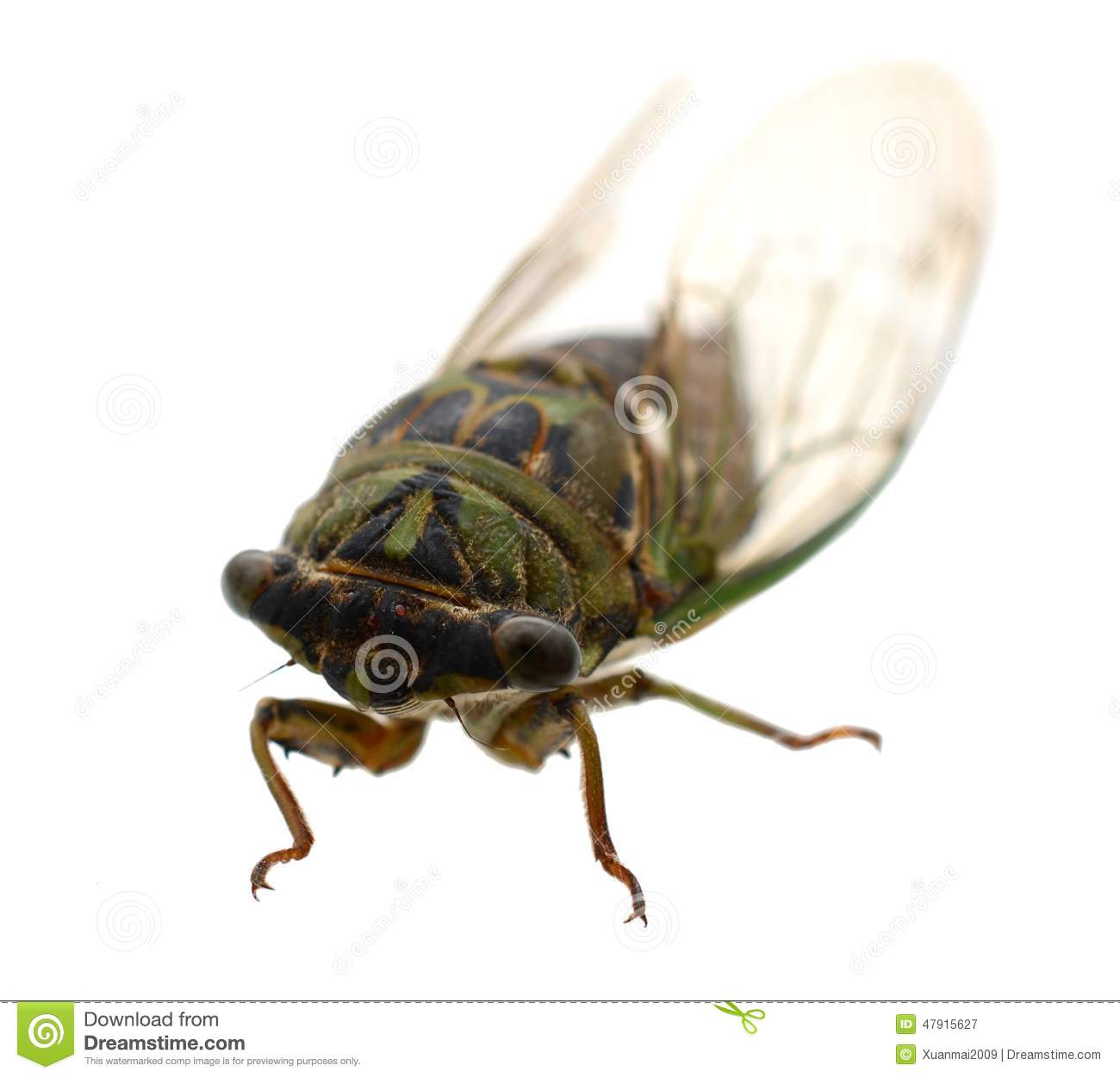 an investigation into the nature and existence of the cicada insect The clanger cicada (psaltoda claripennis) is a locust-like insect whose wings are covered by a vast hexagonal array of 'nanopillars' — blunted spikes on a similar size scale to bacteria (see .