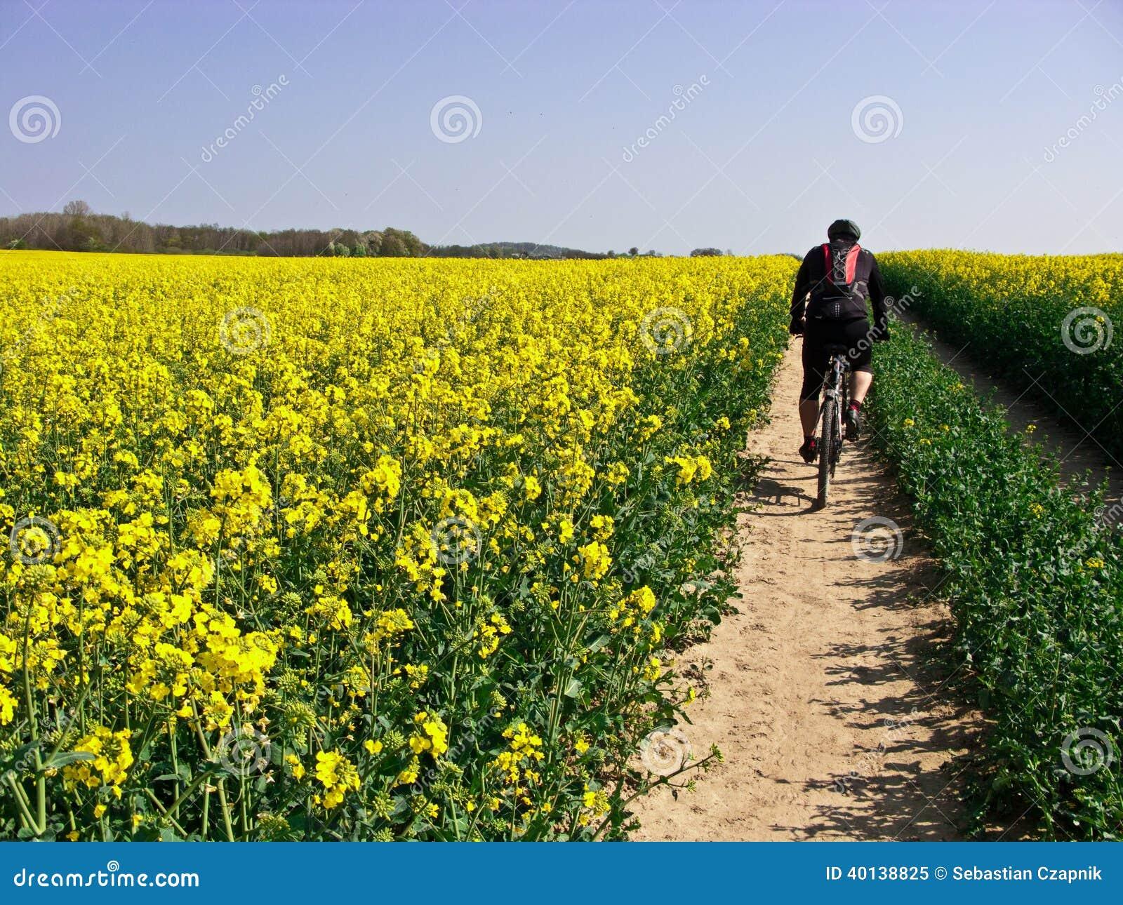 Ciclismo da mola