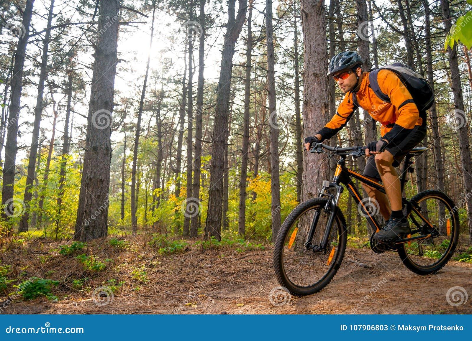 Ciclista en la naranja que monta la bici de montaña en el rastro en el pino hermoso Forest Lit por Sun brillante