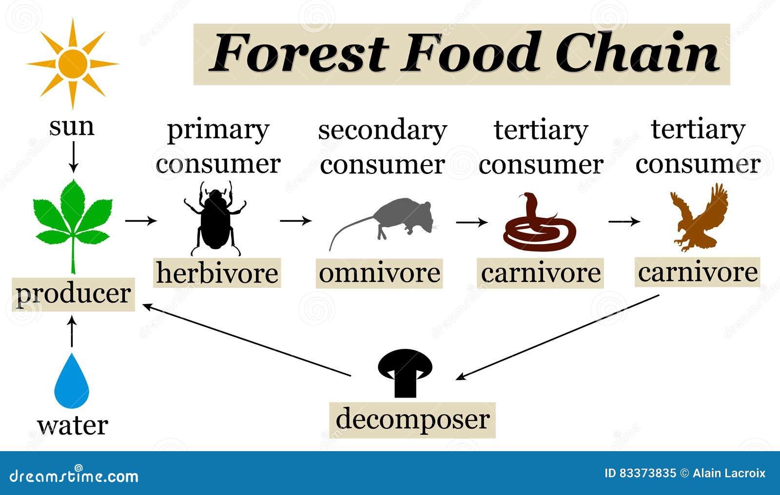 Ciclo alimentare della foresta