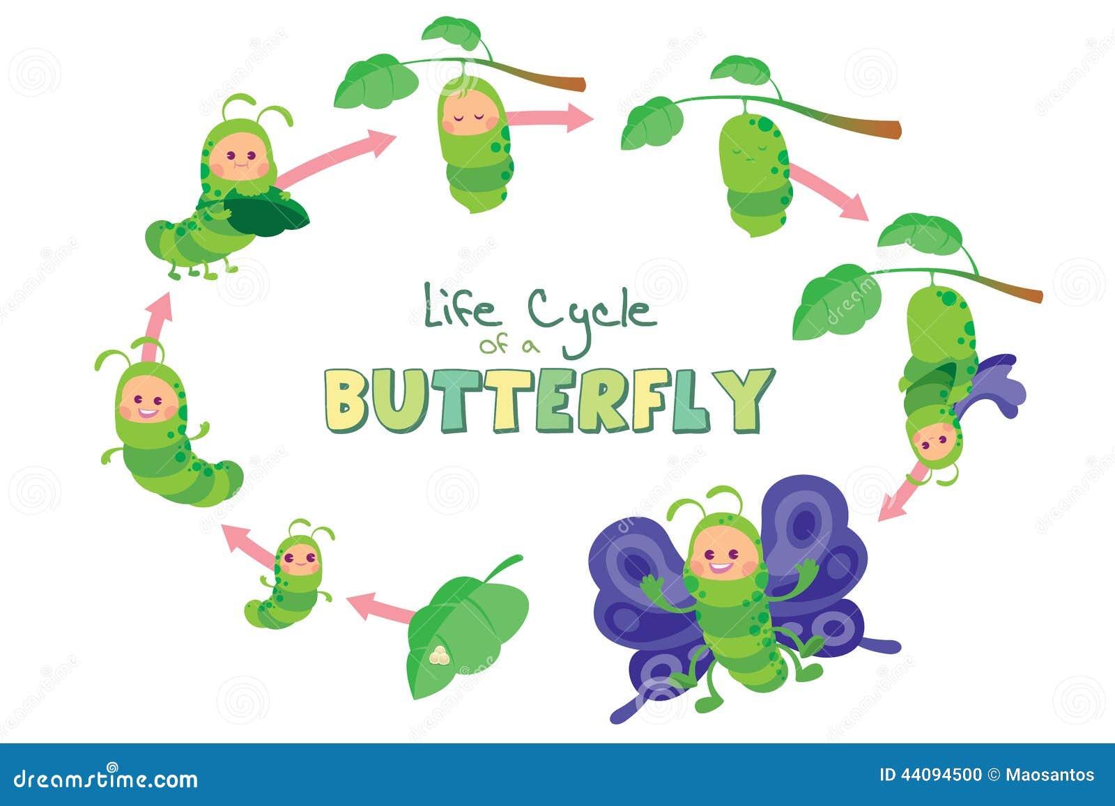 Ciclo De Vida De Una Mariposa Stock De Ilustraci 243 N