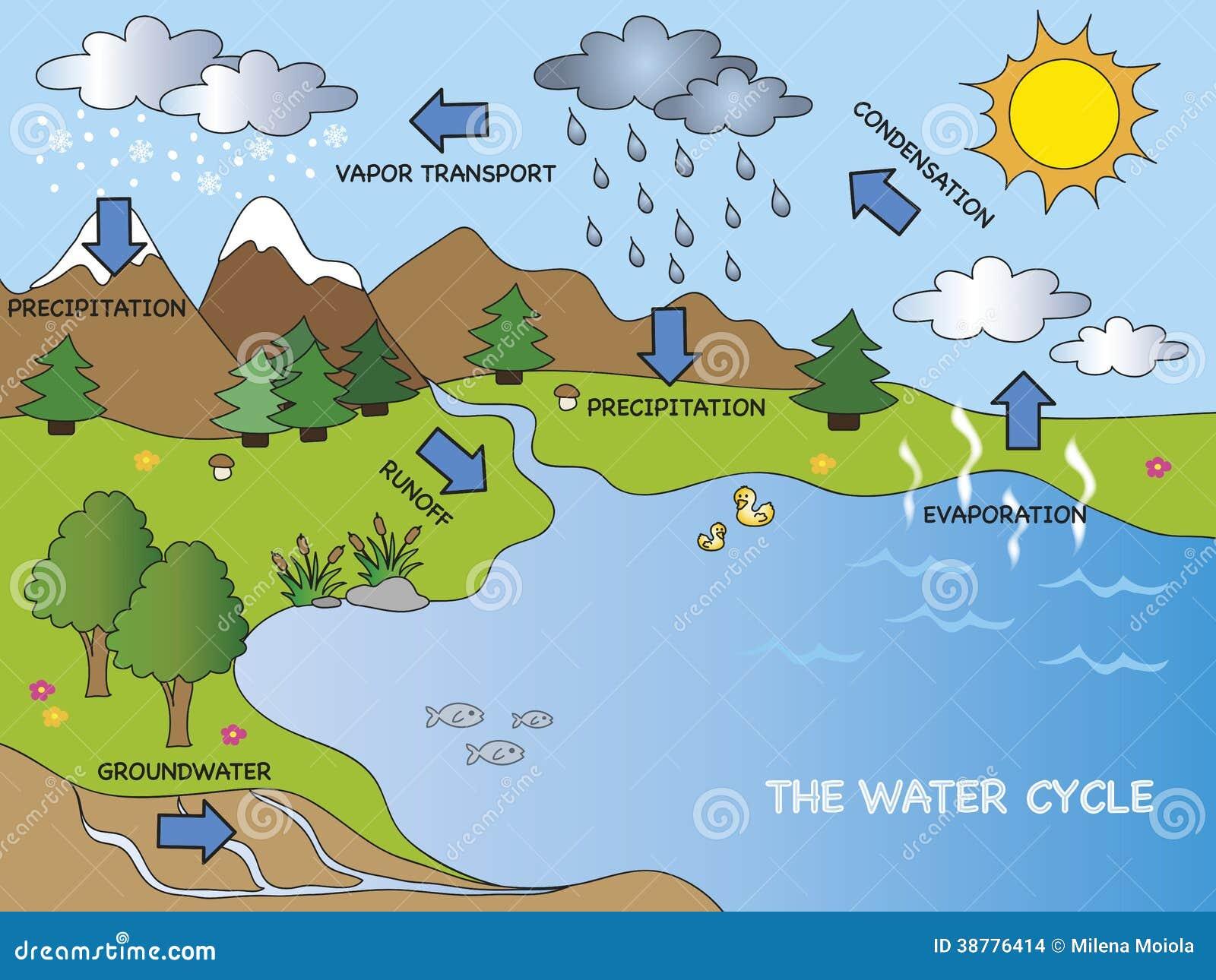 Favorito Ciclo dell'acqua illustrazione di stock. Illustrazione di pianta  ST13