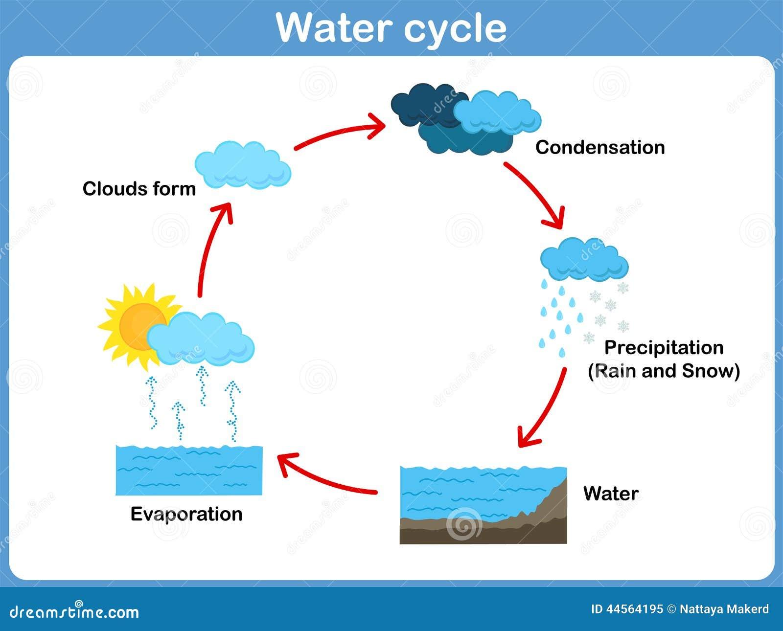 Estremamente Ciclo Di Vettore Di Acqua Per I Bambini Illustrazione Vettoriale  CW69
