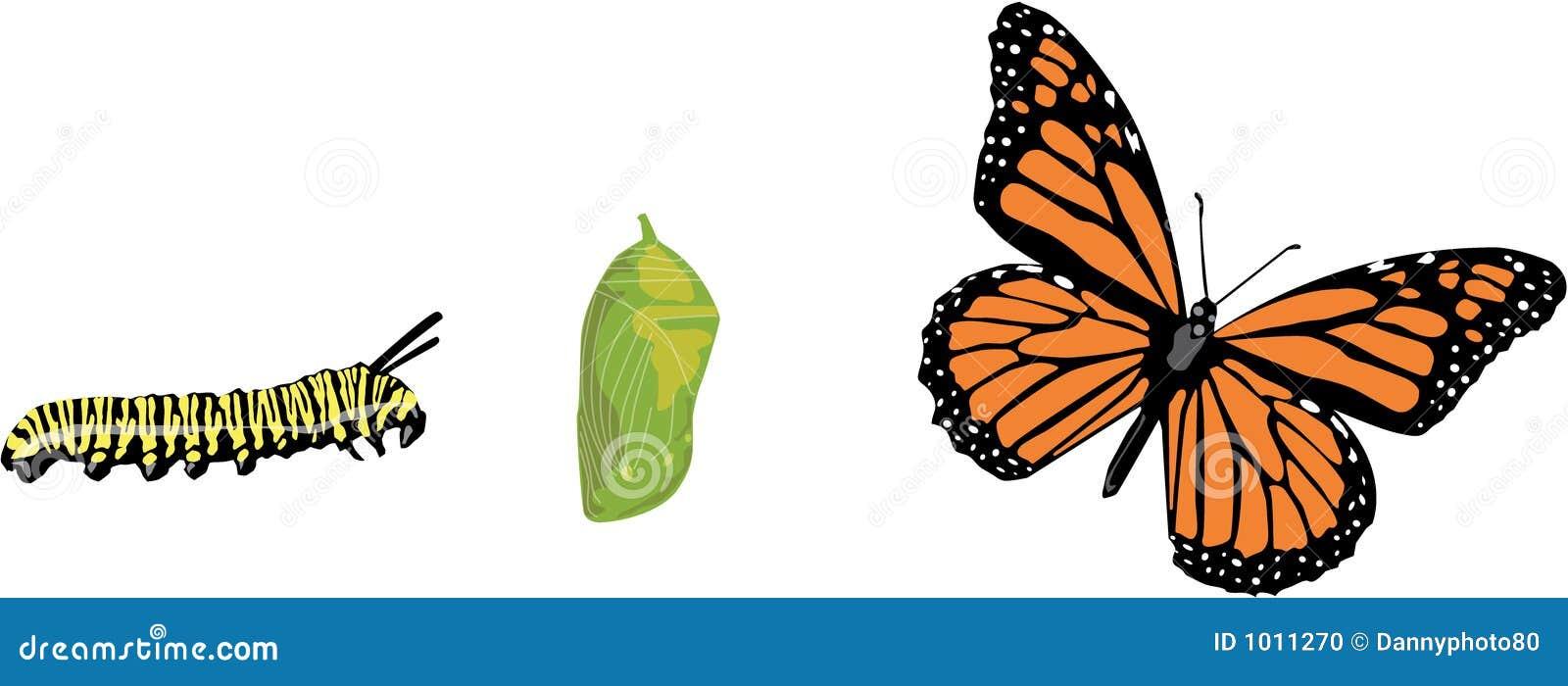 Ciclo vital de la mariposa