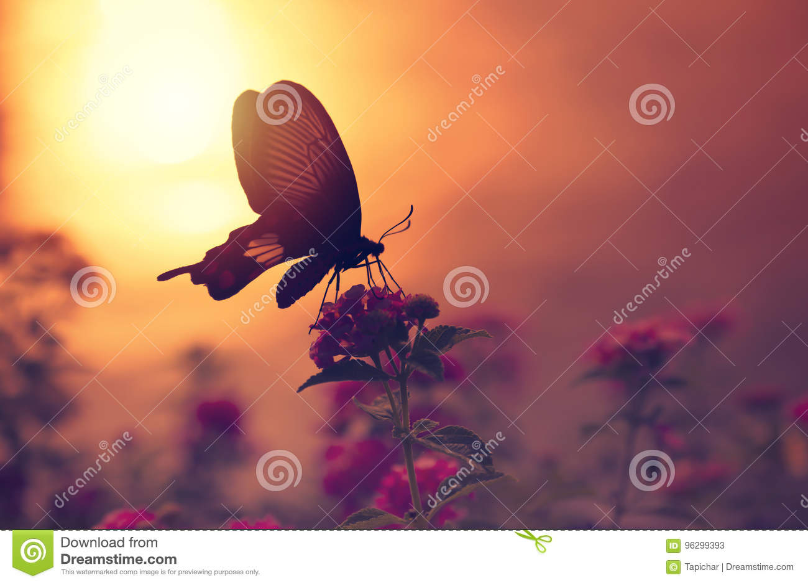Cień motyl na kwiatach z światła słonecznego odbiciem od wata