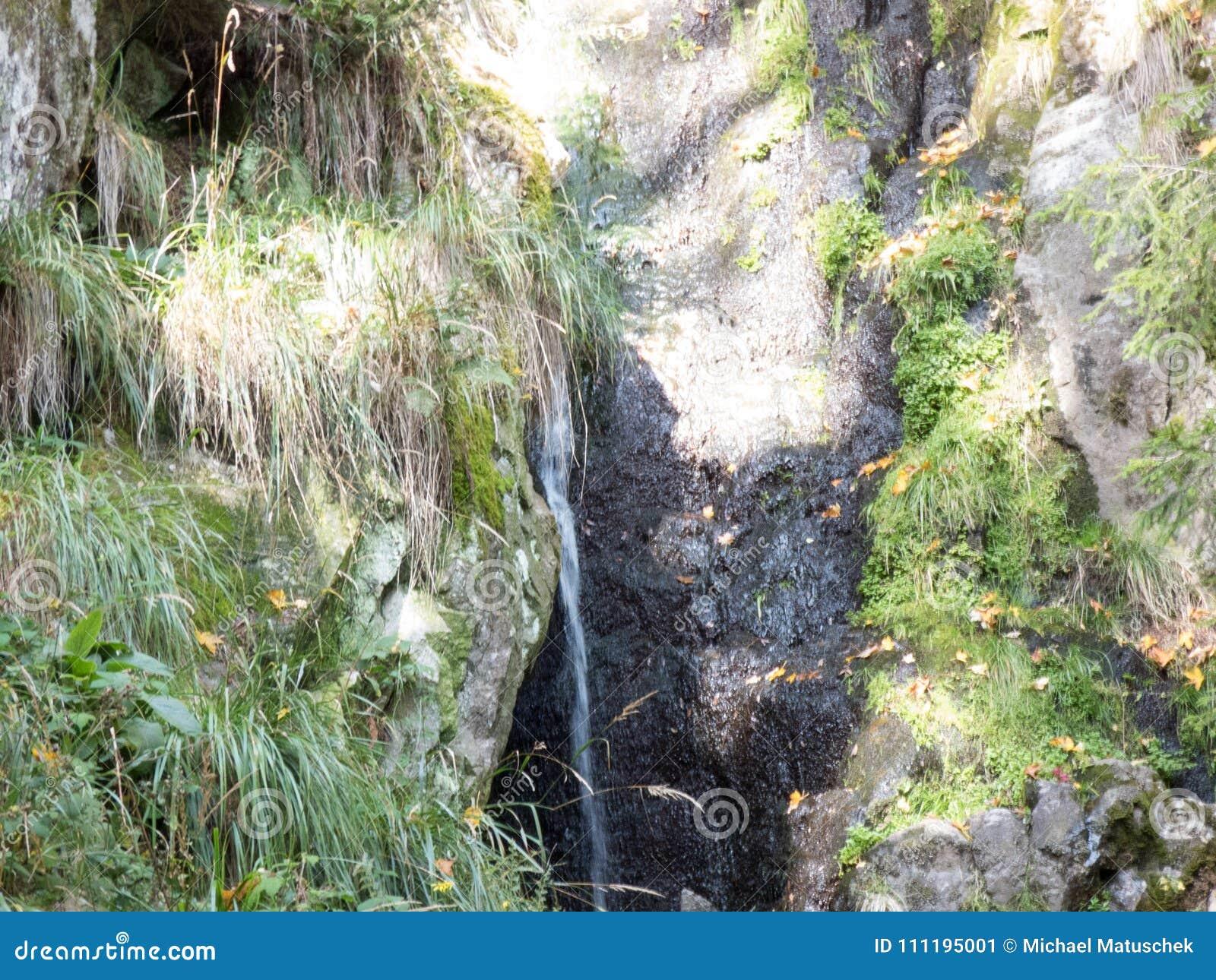 Ciec w lesie na kamiennej ścianie