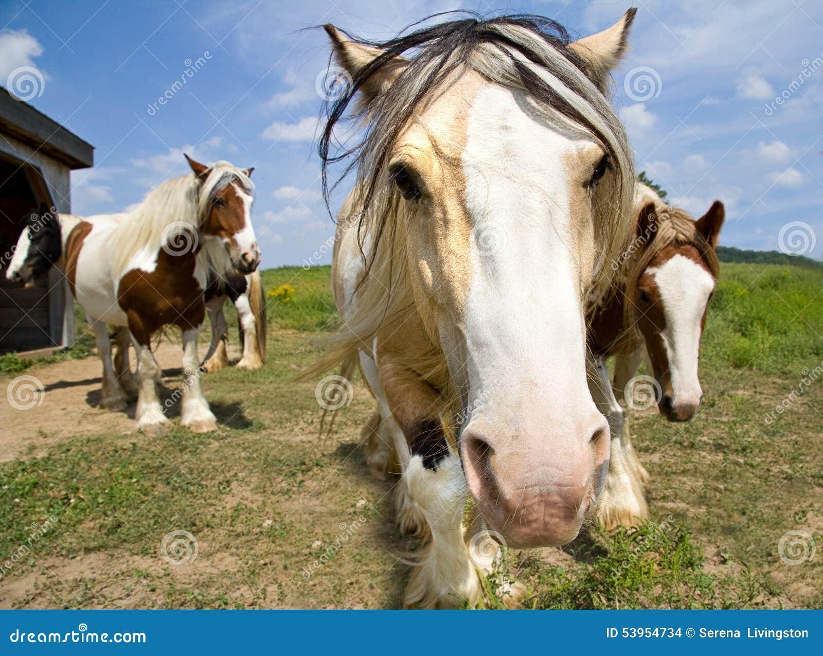Ciekawi konie