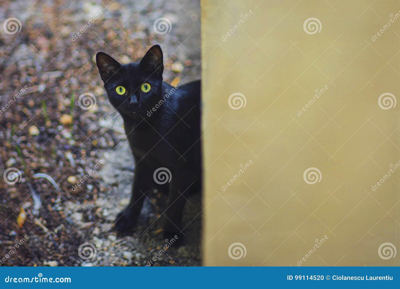 Ciekawy kot w podwórku w dżdżystym jesień dniu