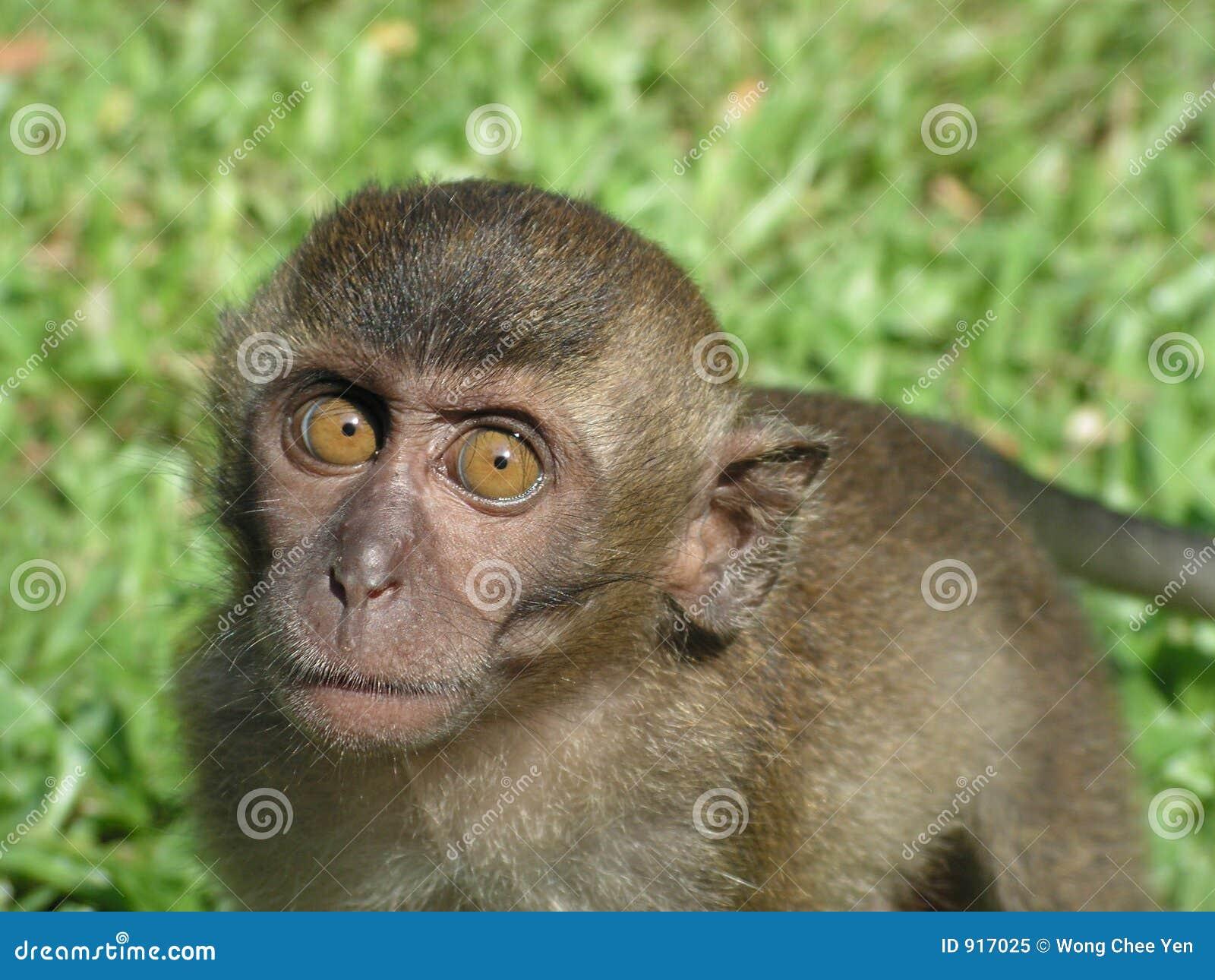 Ciekawy małpie dziecko się gapić