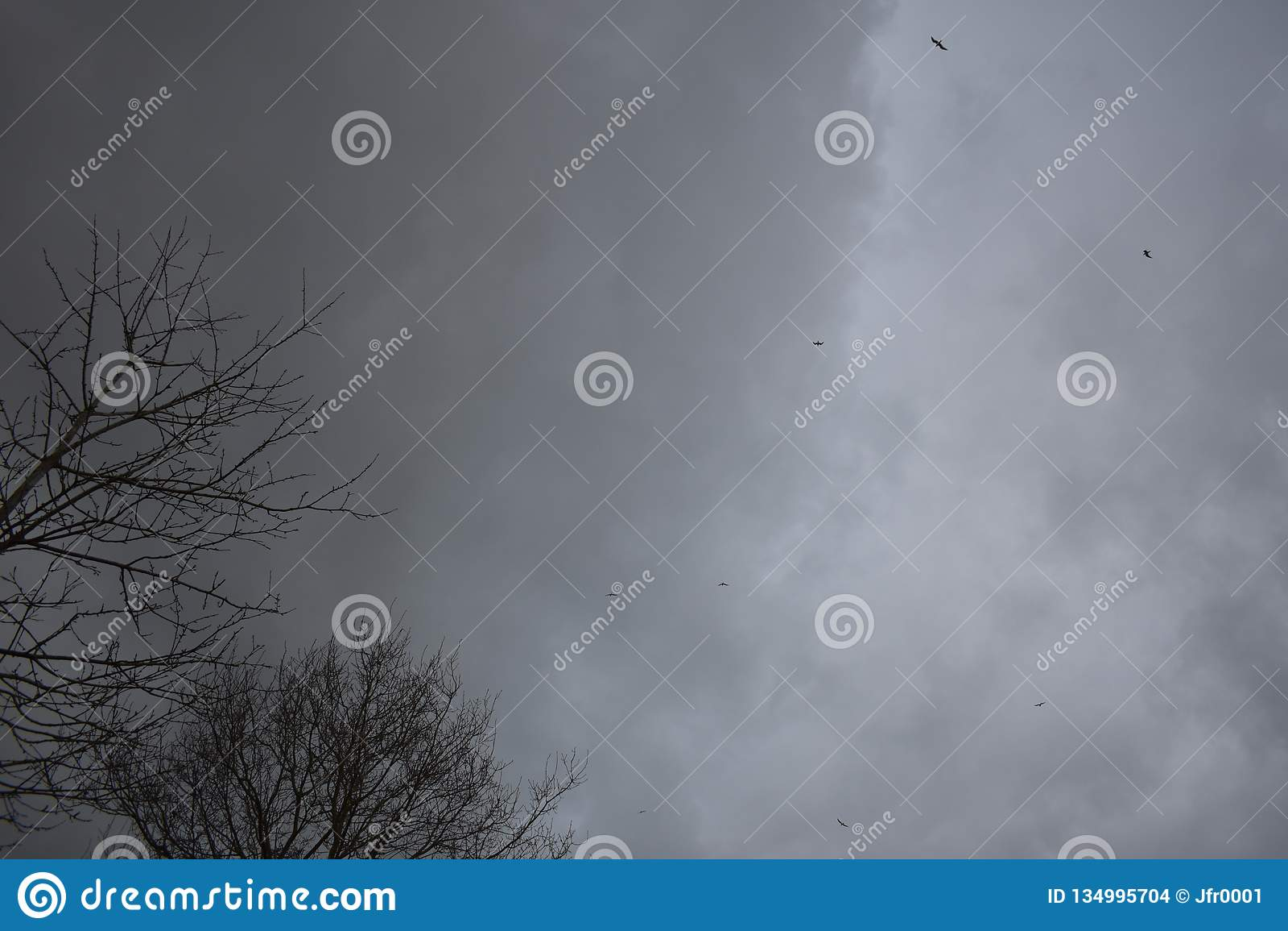 Ciel avec des nuages et des oiseaux