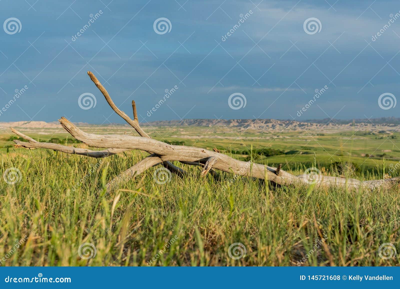 Ciel bleu au-dessus du morceau de bois mort dans le domaine