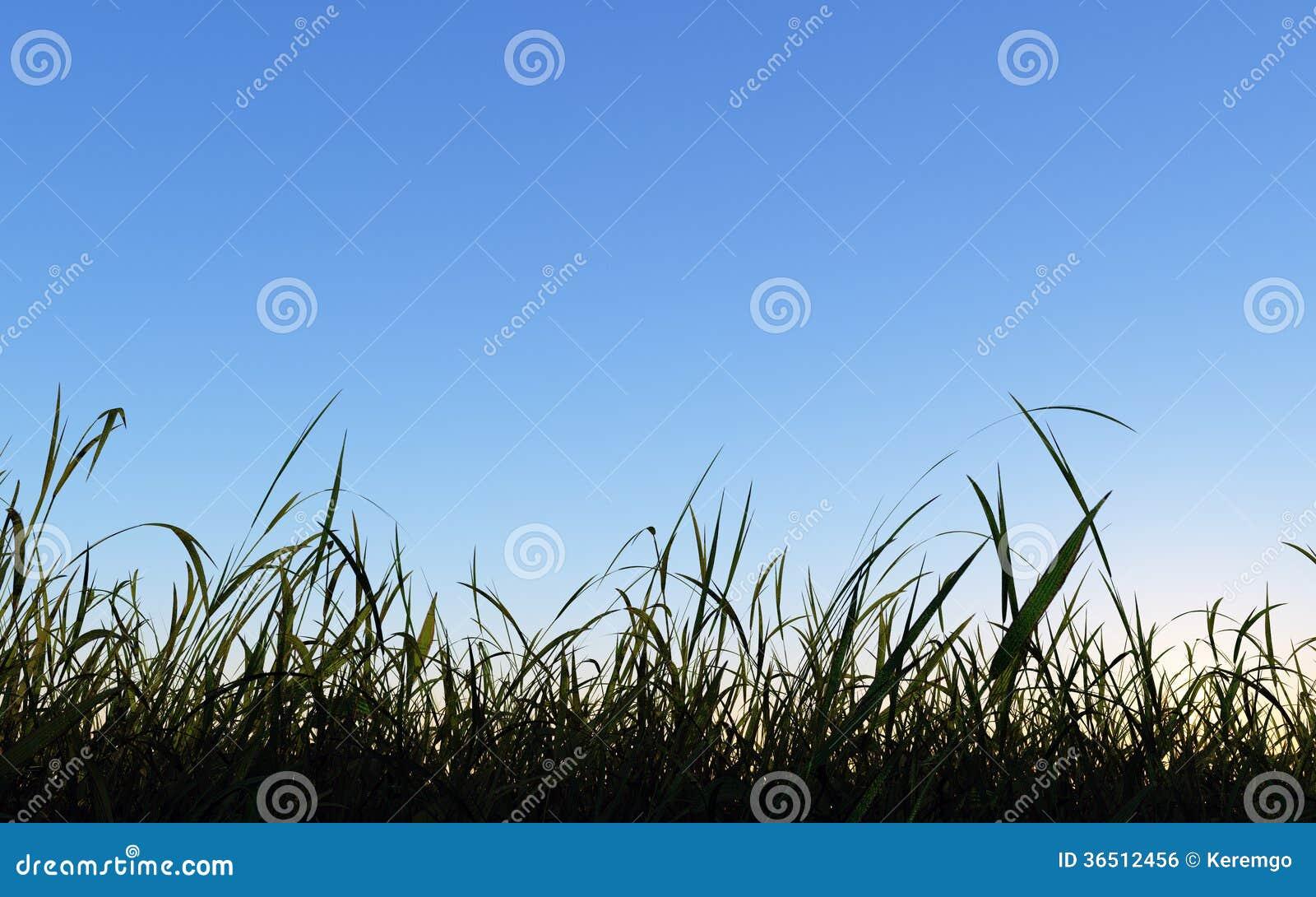 Ciel bleu de prairie