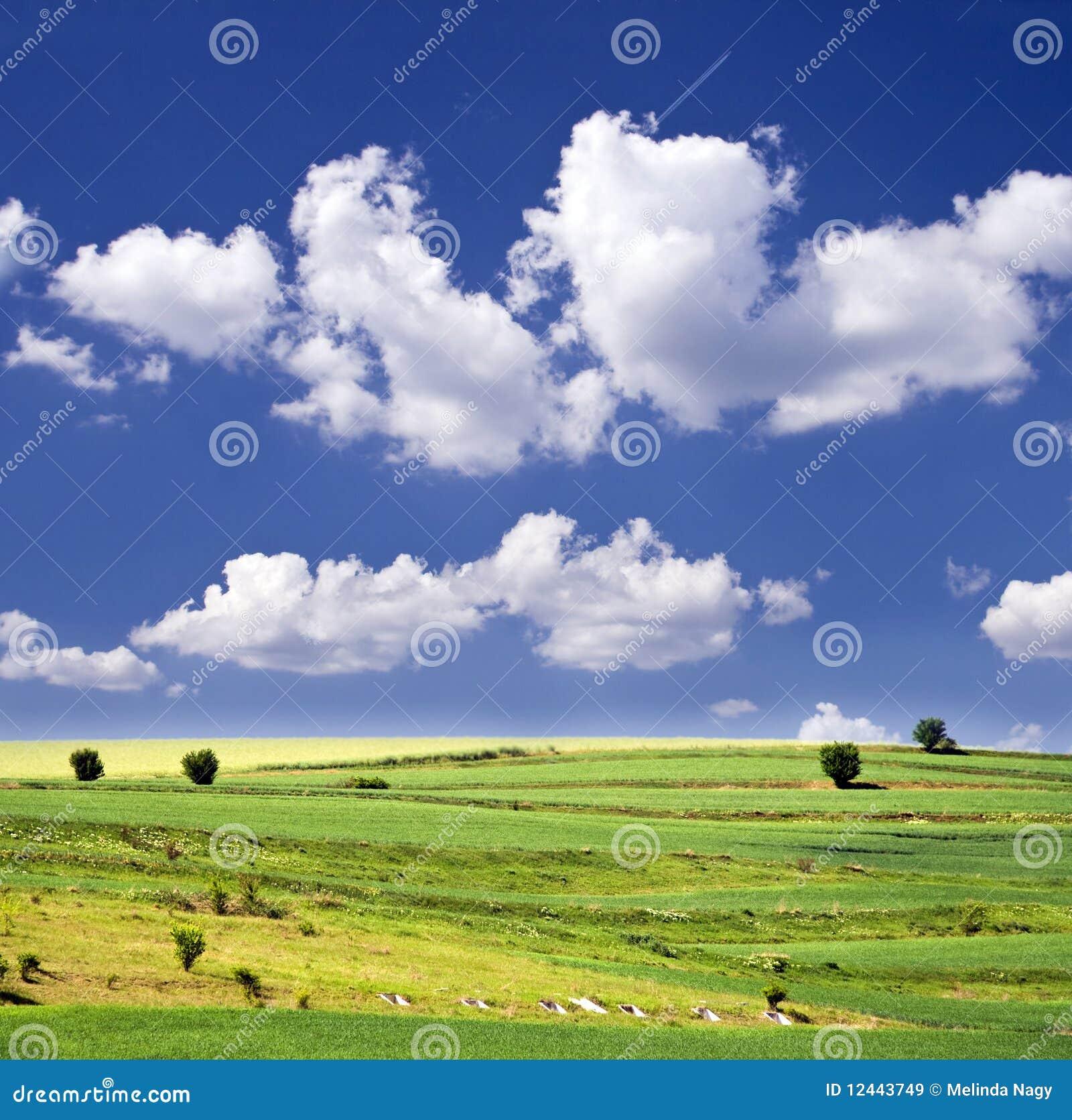 Images Gratuites Ciel Bleu Et Champ Vert Image Image 12443749