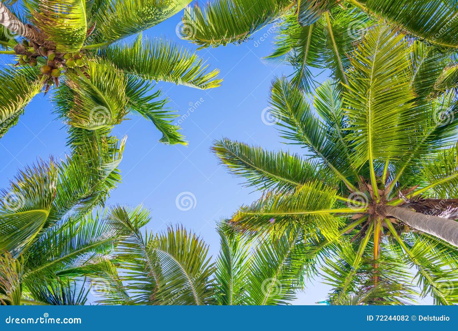 Ciel bleu et palmiers de dessous
