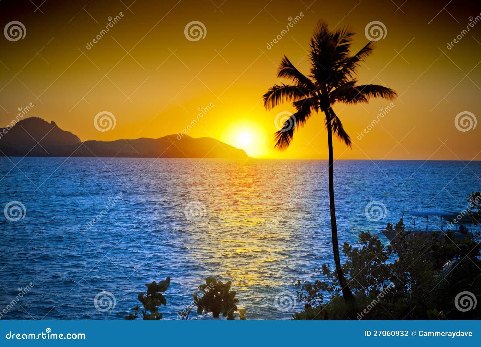 Ciel de coucher du soleil de palmier d océan