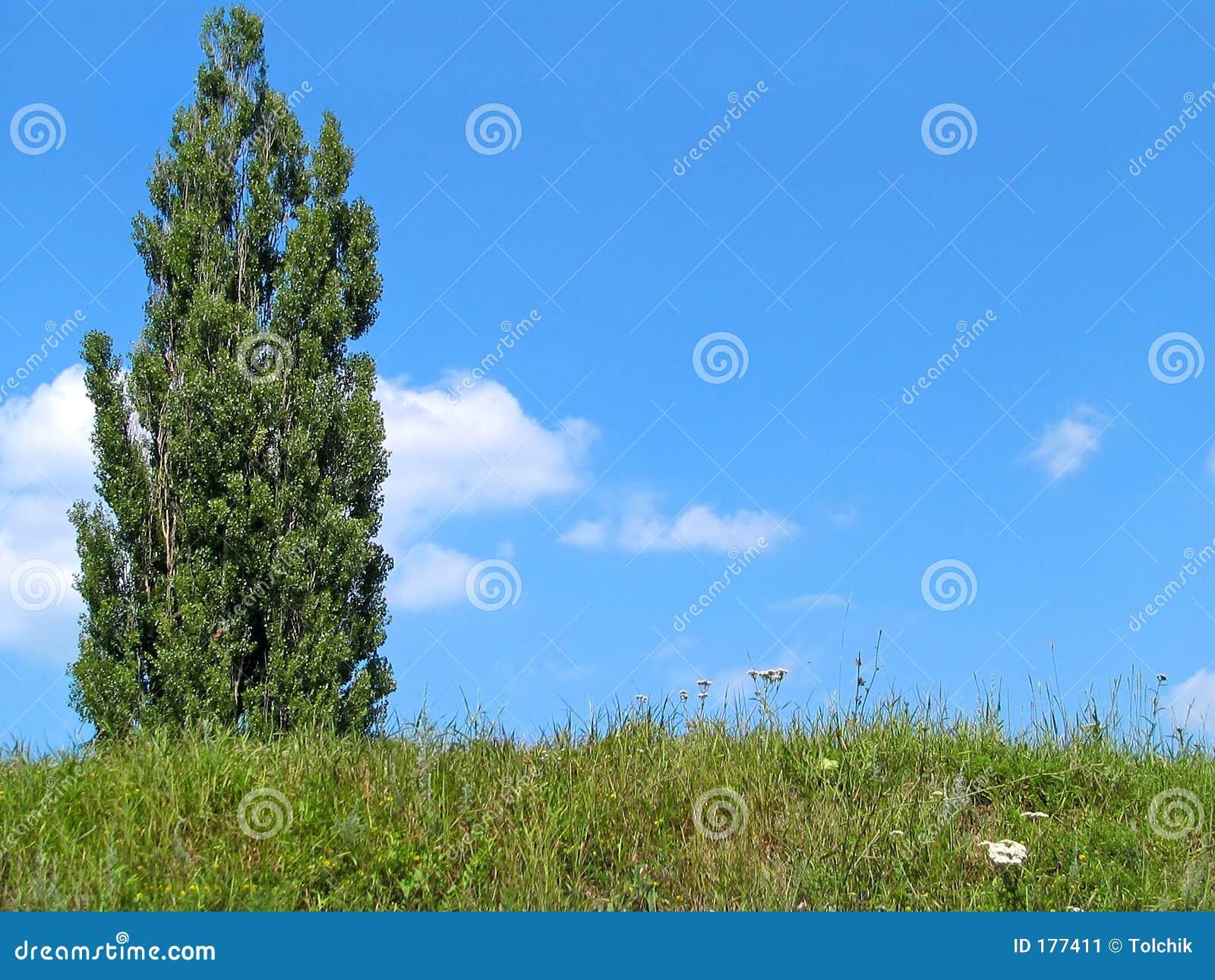 Ciel et arbre