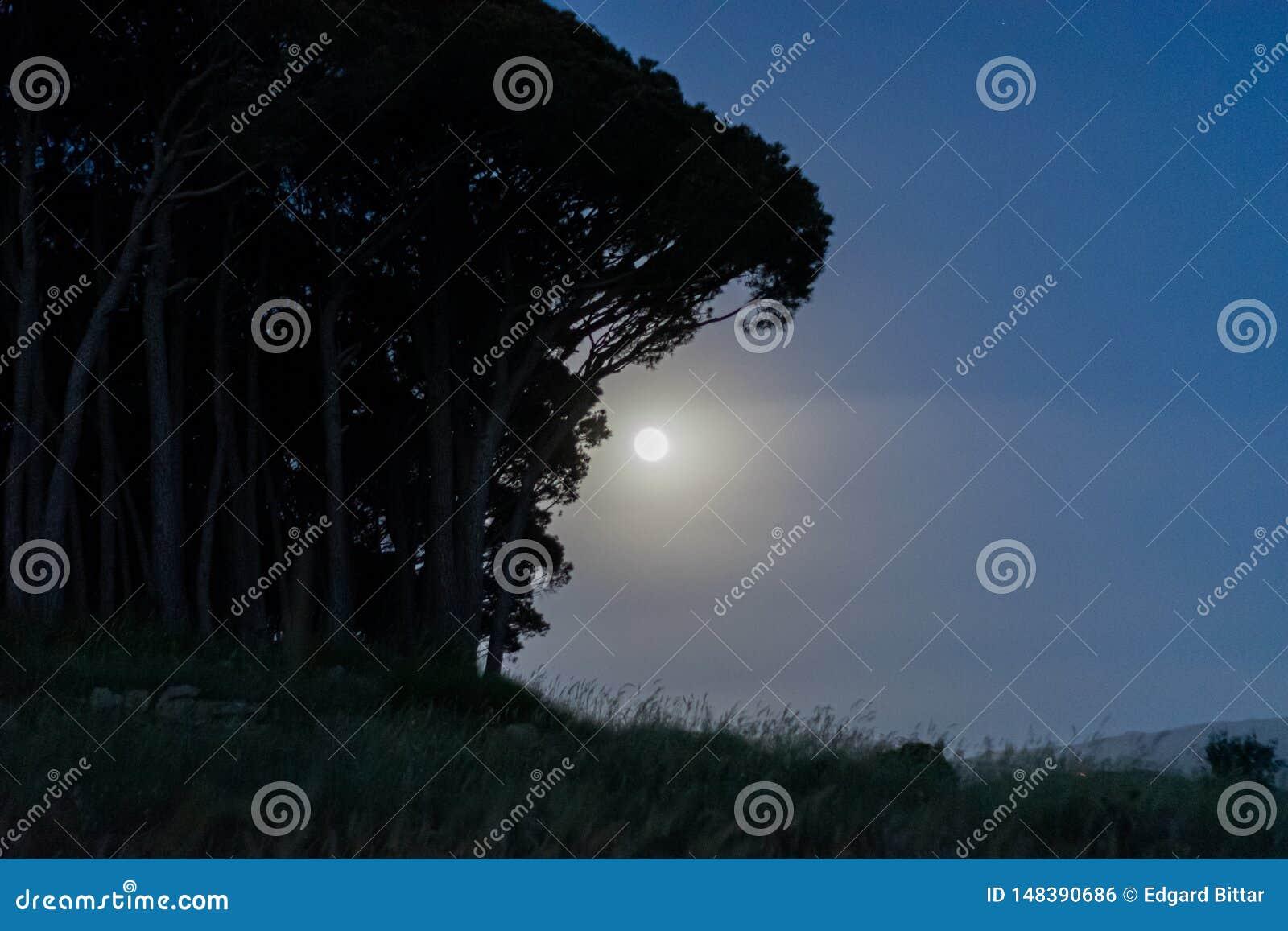 Ciel nocturne sous la lumi?re de lune