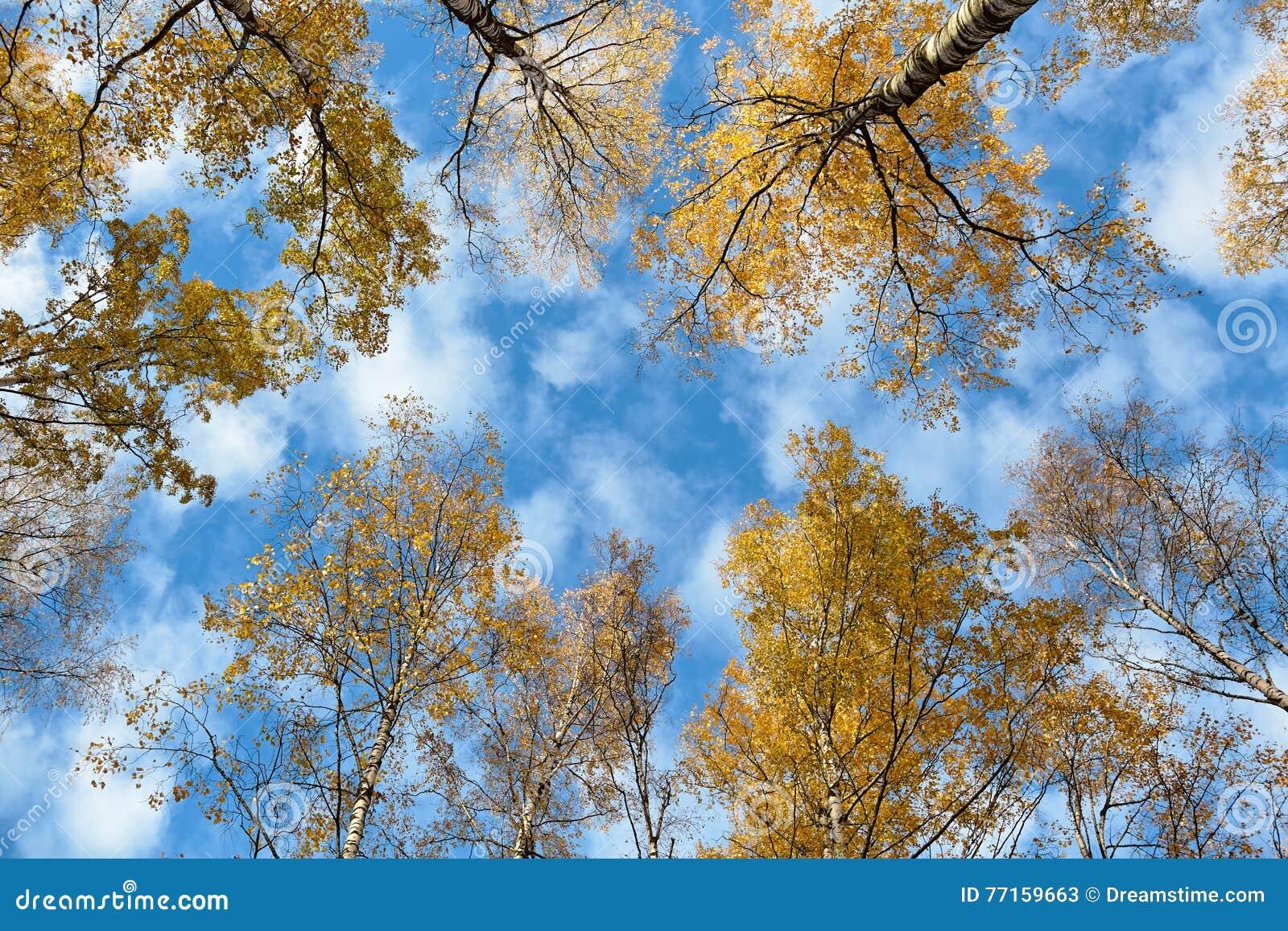 Ciel par les arbres