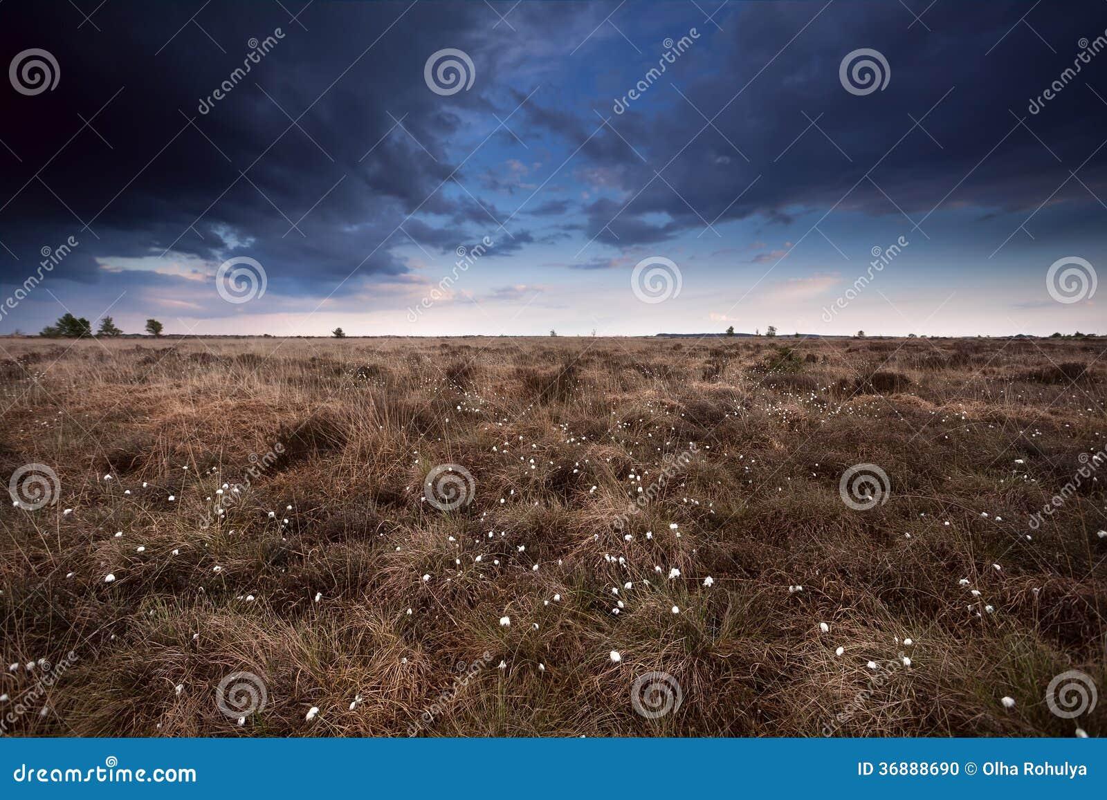Download Cielo Appannato Sopra La Palude Con Erioforo Fotografia Stock - Immagine di campagna, scenico: 36888690