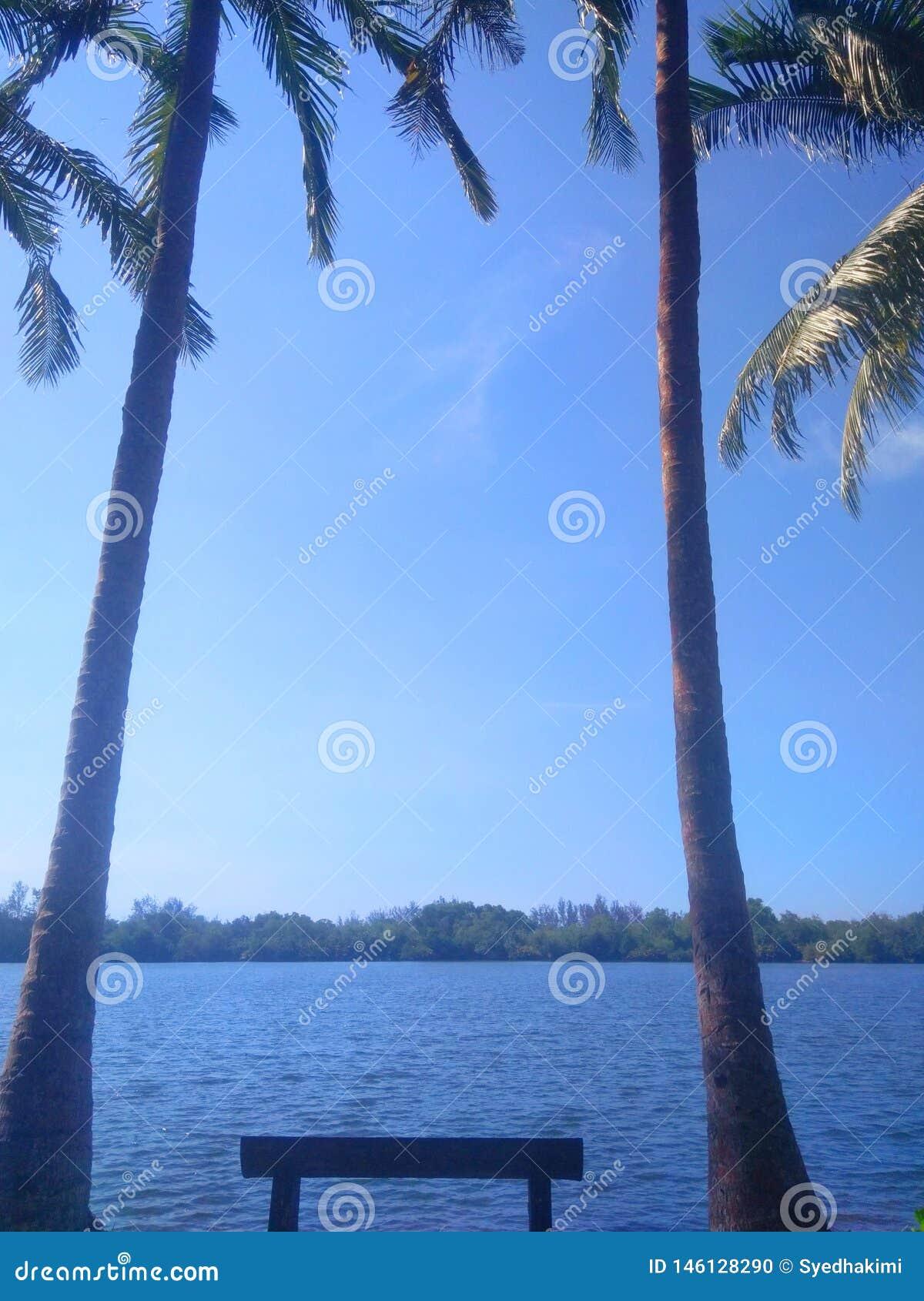 Cielo azul con el ?rbol de coco