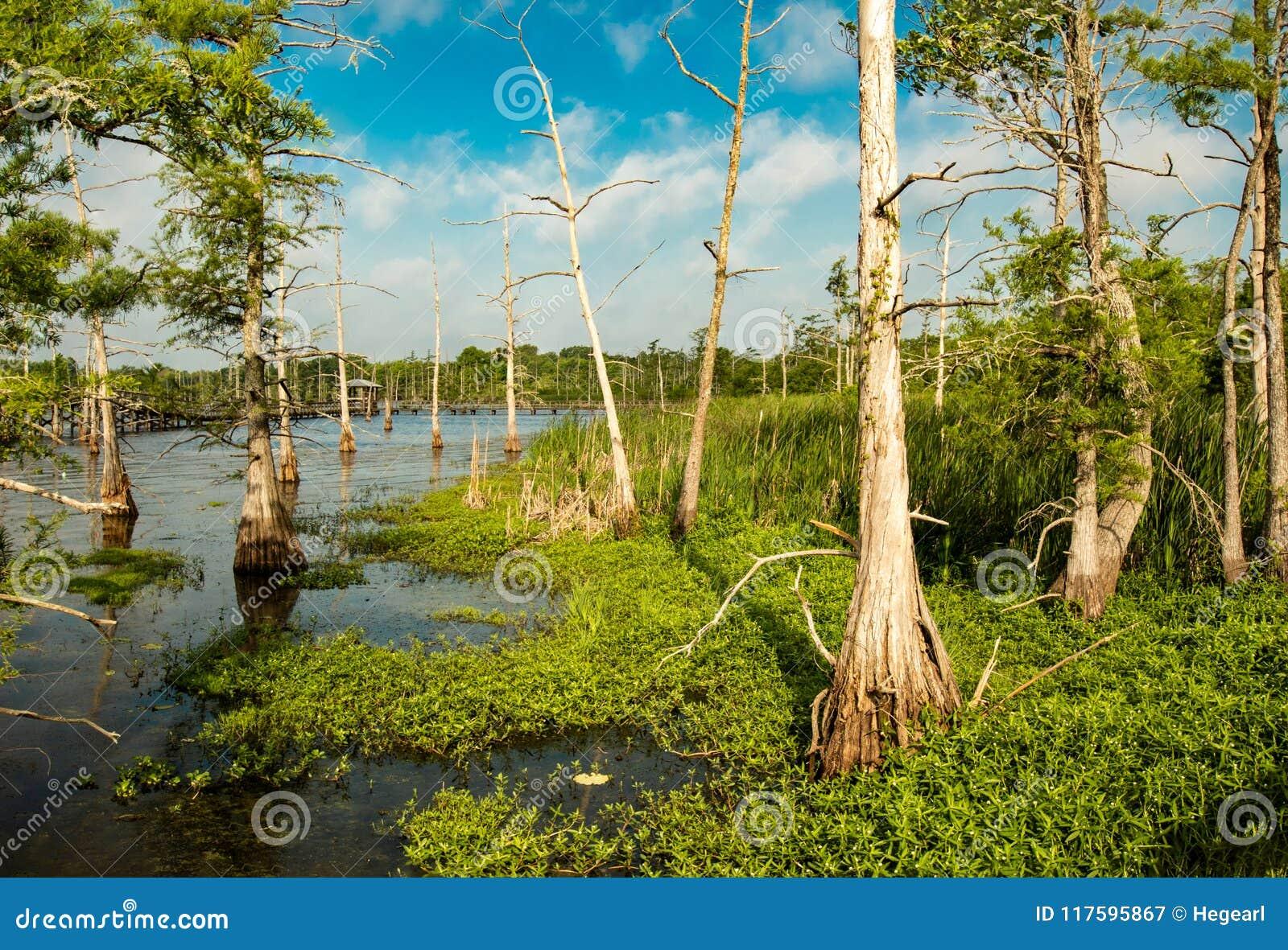 Cielo azul profundo cubierto por las nubes de cúmulo blancas sobre un camino para ennegrecer el lago bayou