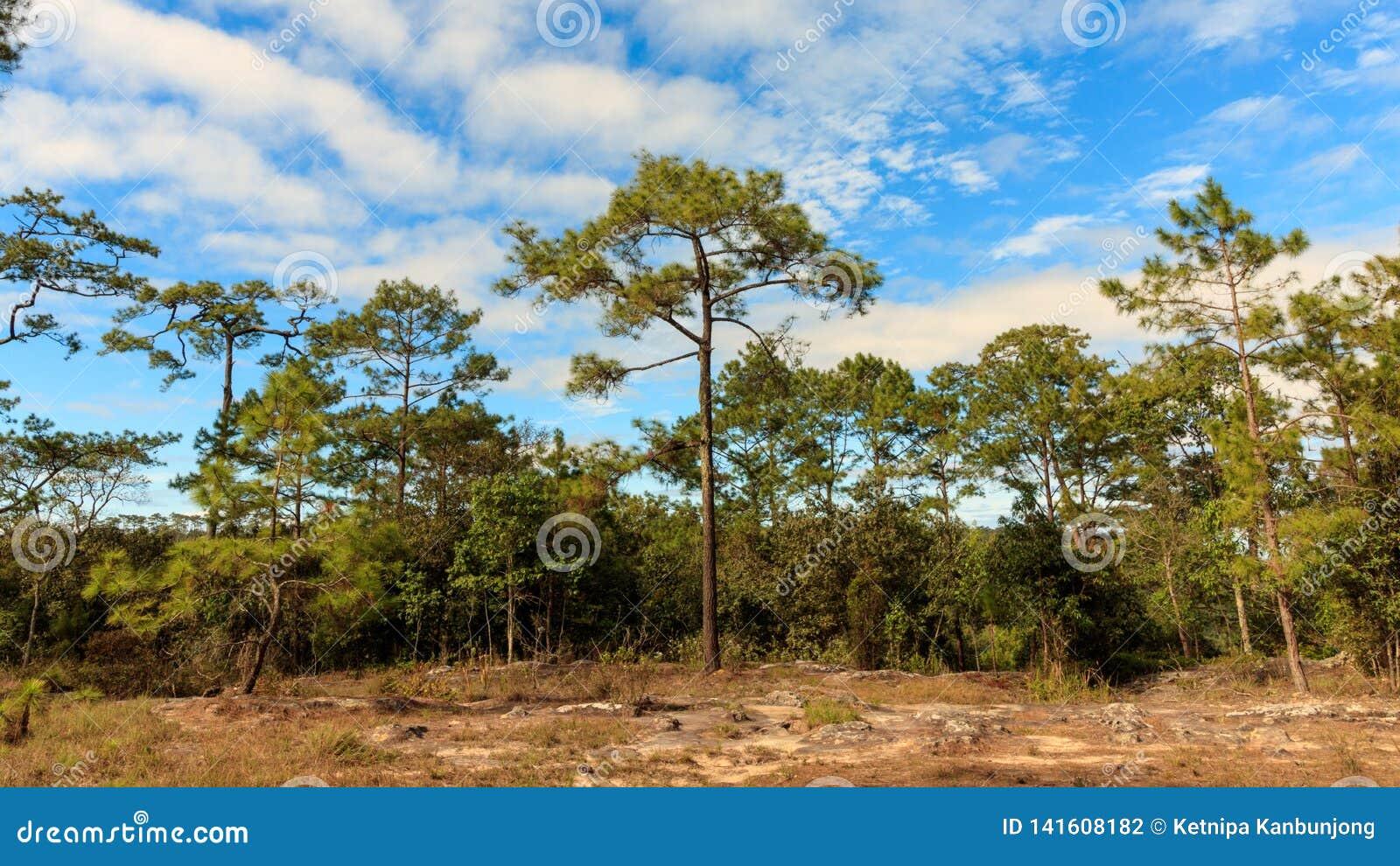 Cielo blu con la nuvola nella foresta