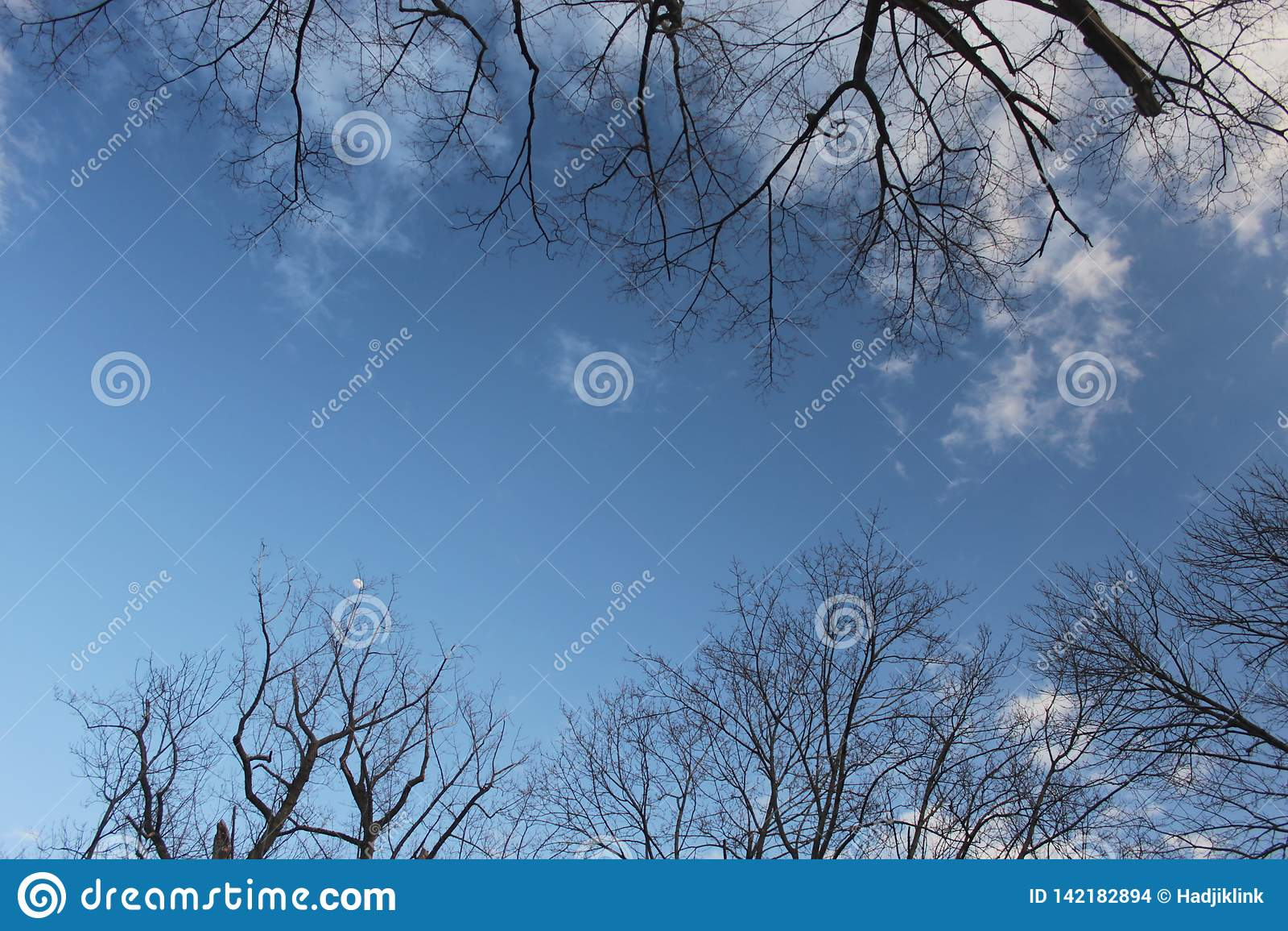 Cielo blu con le nuvole incorniciate dai ramoscelli dell albero