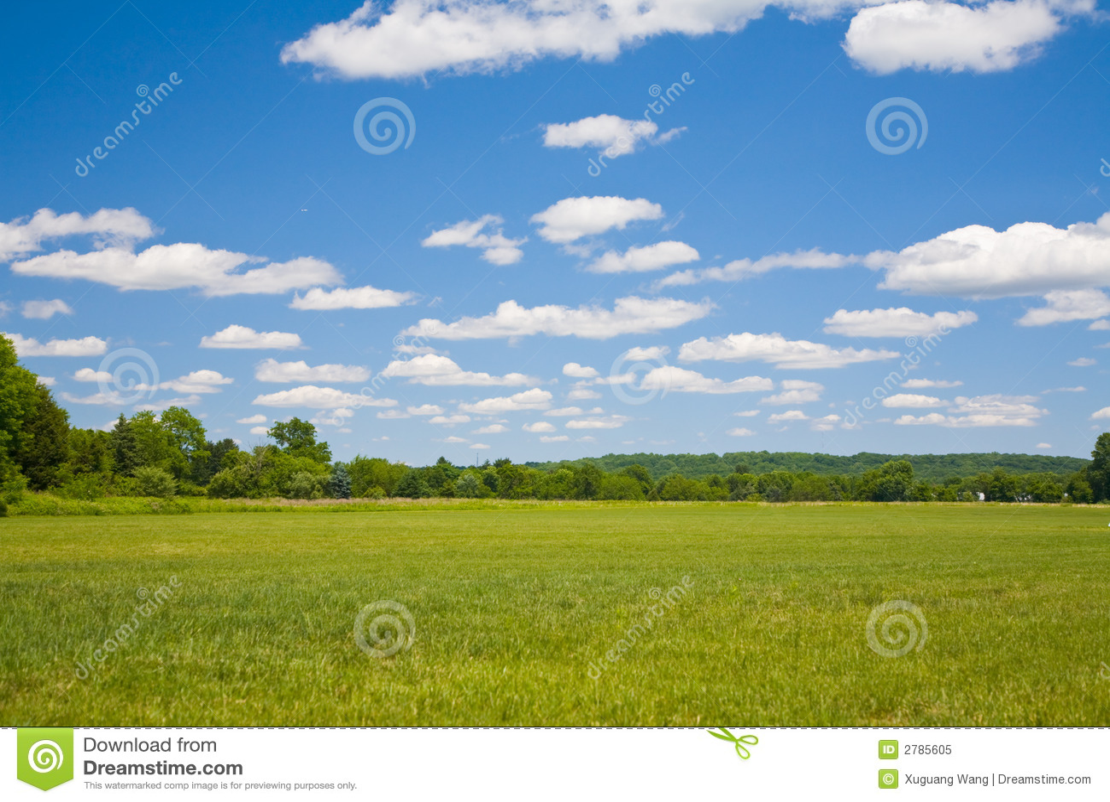 Cielo blu ed erba verde
