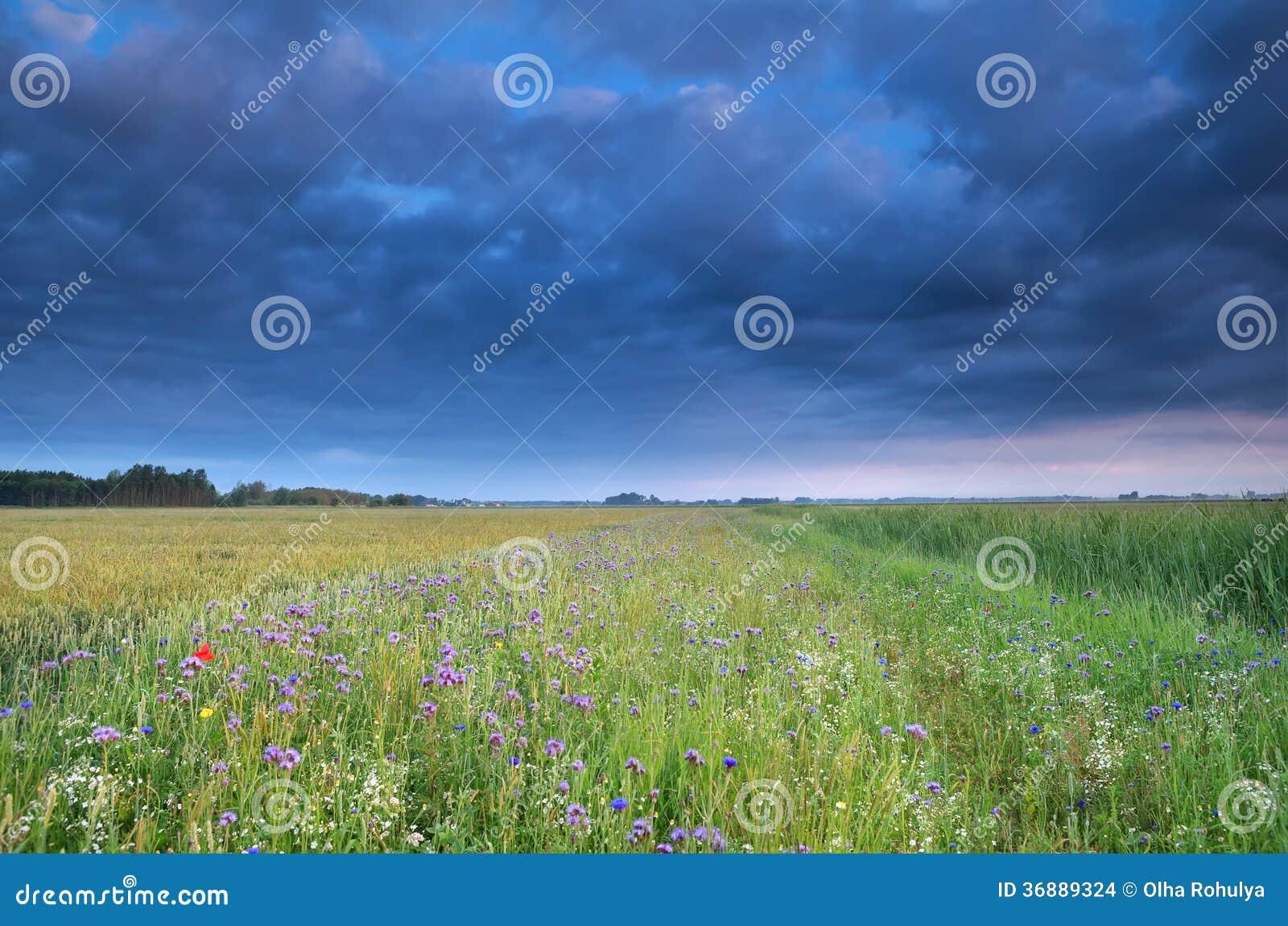 Download Cielo Blu Sopra Il Campo Con I Wildflowers Fotografia Stock - Immagine di estate, cloudscape: 36889324