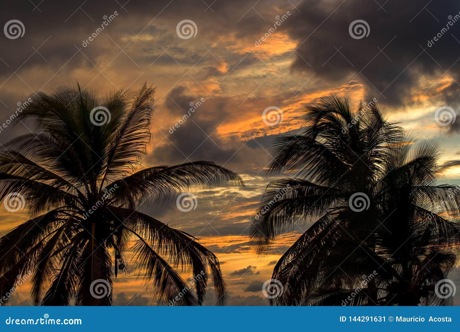 Cielo de la puesta del sol detr?s de las palmeras