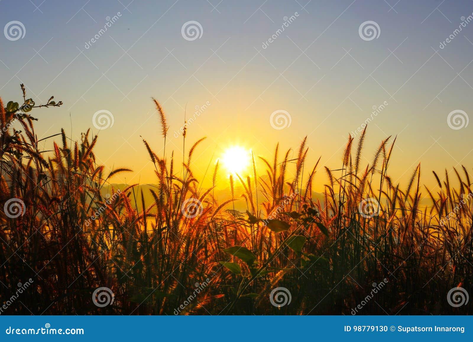 Cielo de la salida del sol en Tailandia